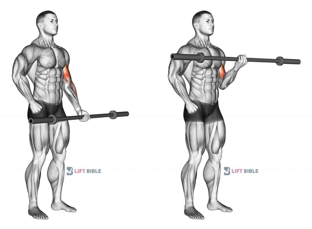 Barbell Alternate Biceps Curl