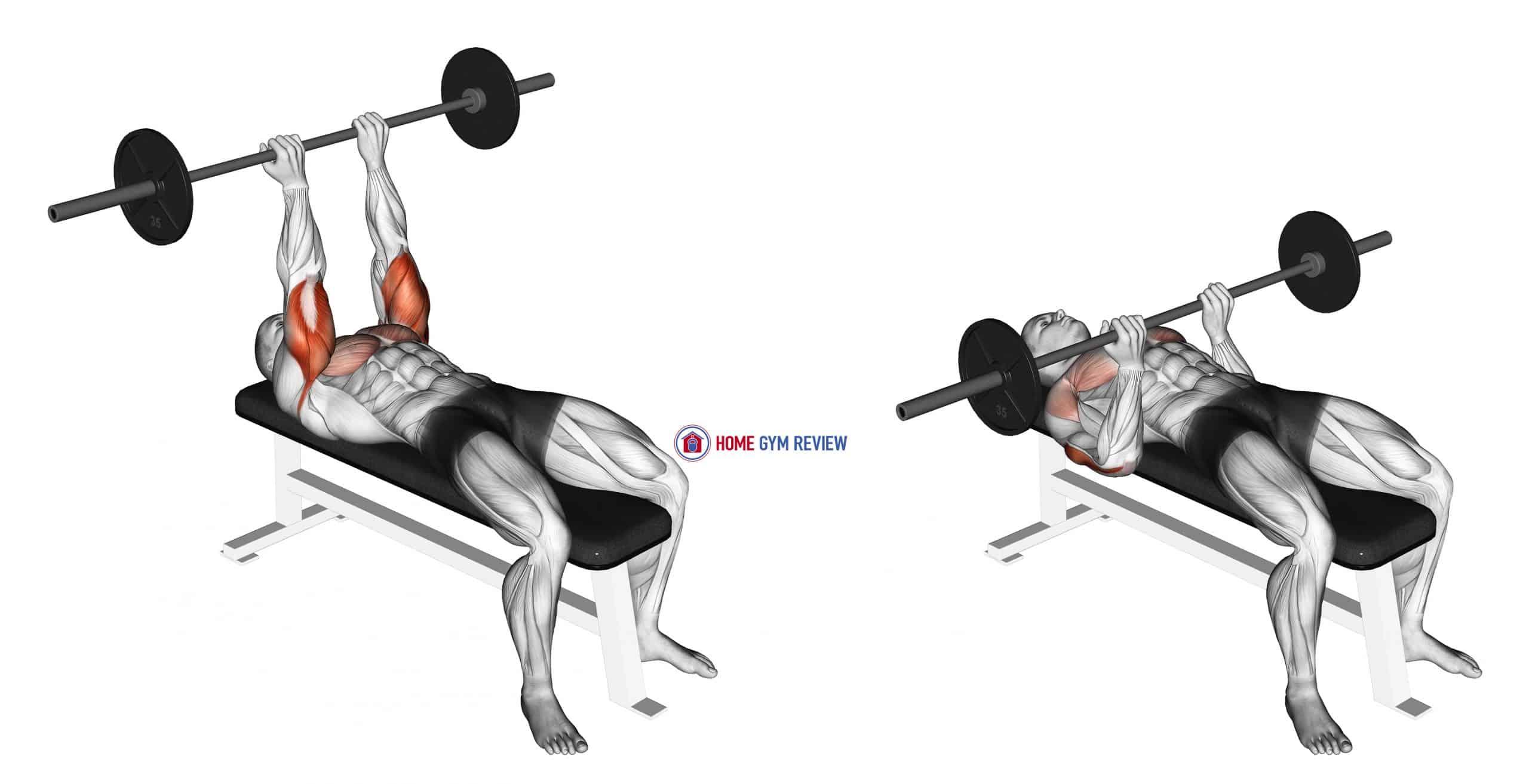 Barbell Lying Triceps Extension Skull Crusher