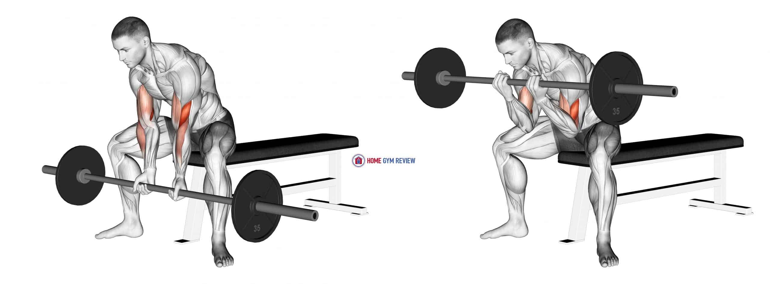 Barbell Seated Close-grip Concentration Curl