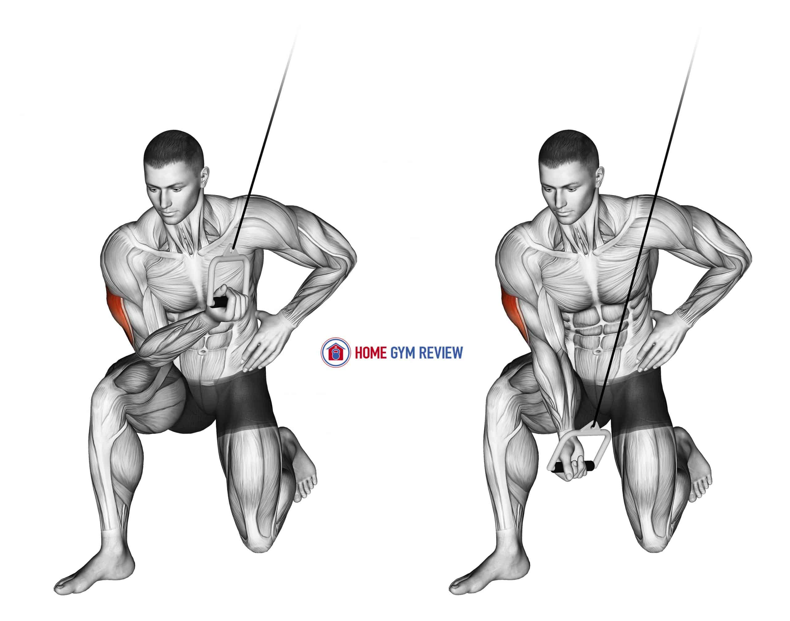 Cable Concentration Extension (on knee)