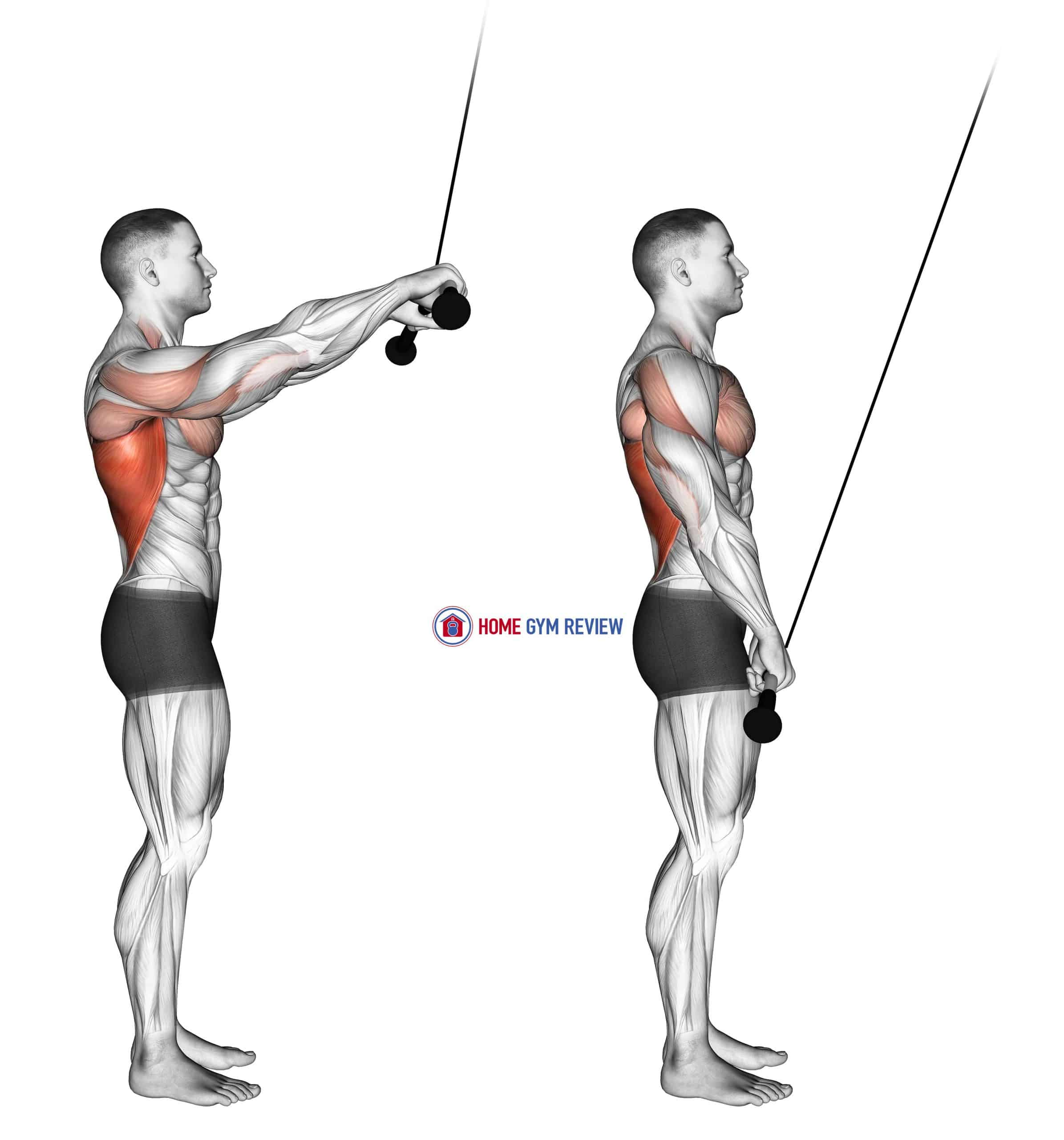 Cable Pushdown (straight arm) (version 2)