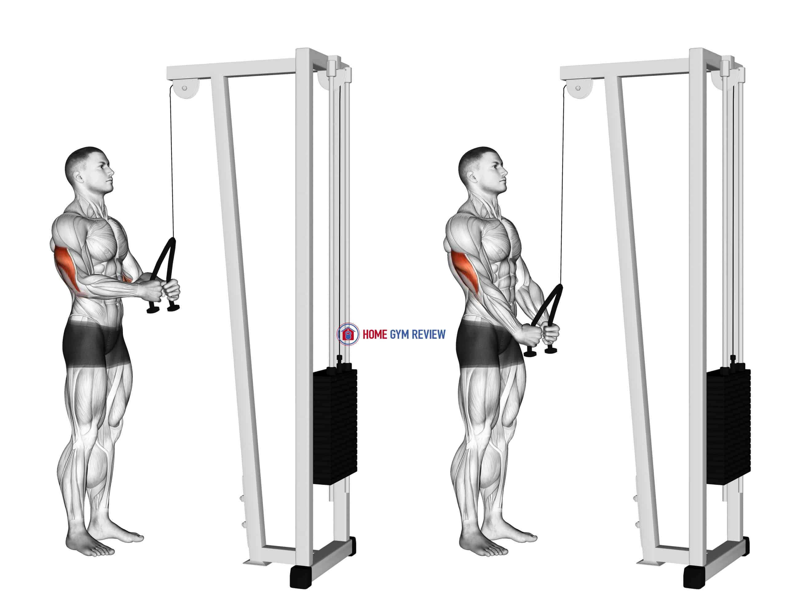 Cable Pushdown (with rope attachment)