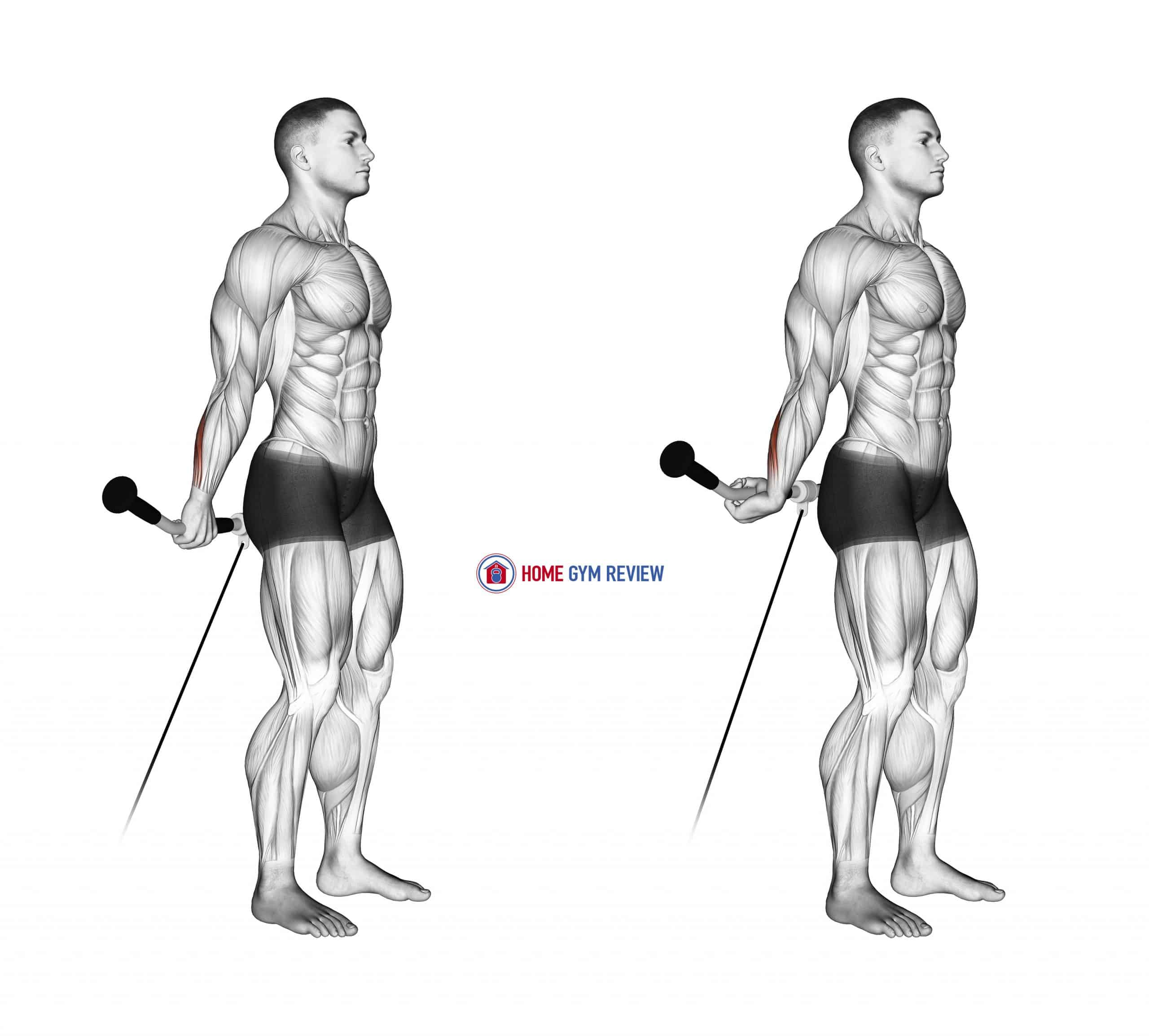 Cable Standing Back Wrist Curl