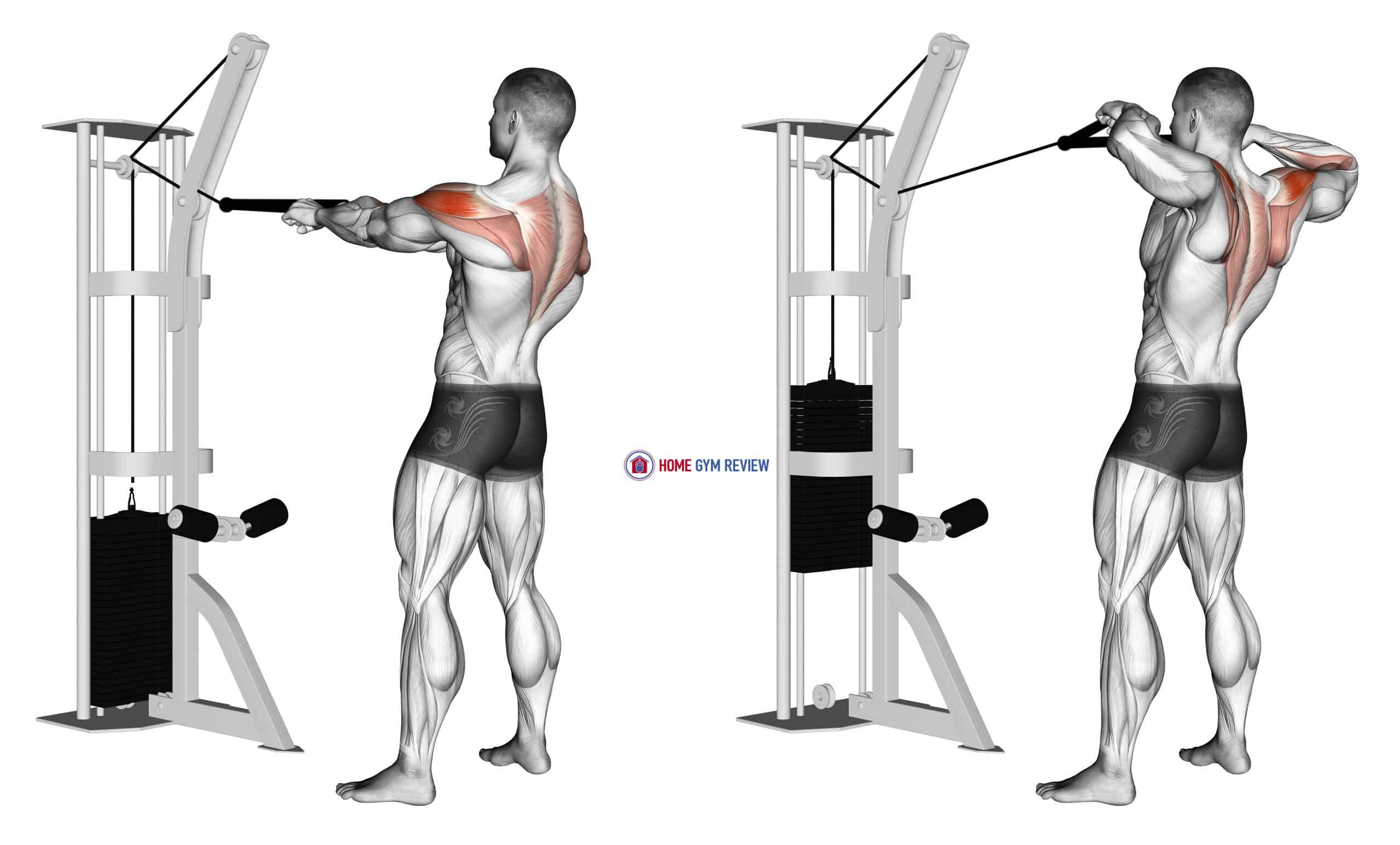 Cable Standing Rear Delt Row (with rope)