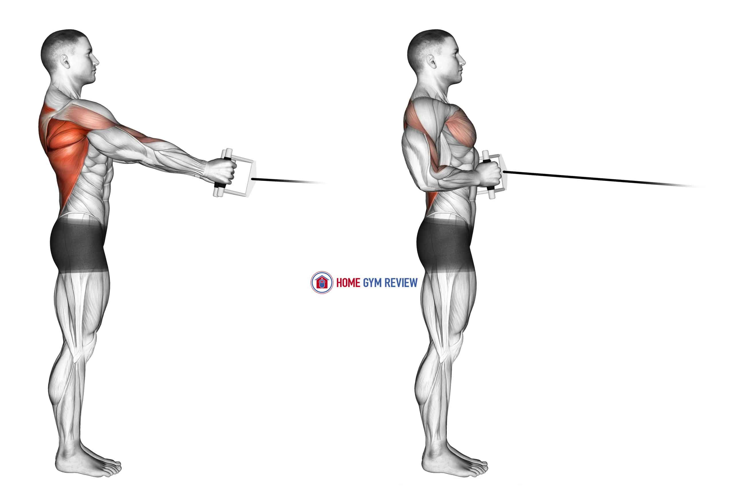 Cable Standing Row (V-bar)