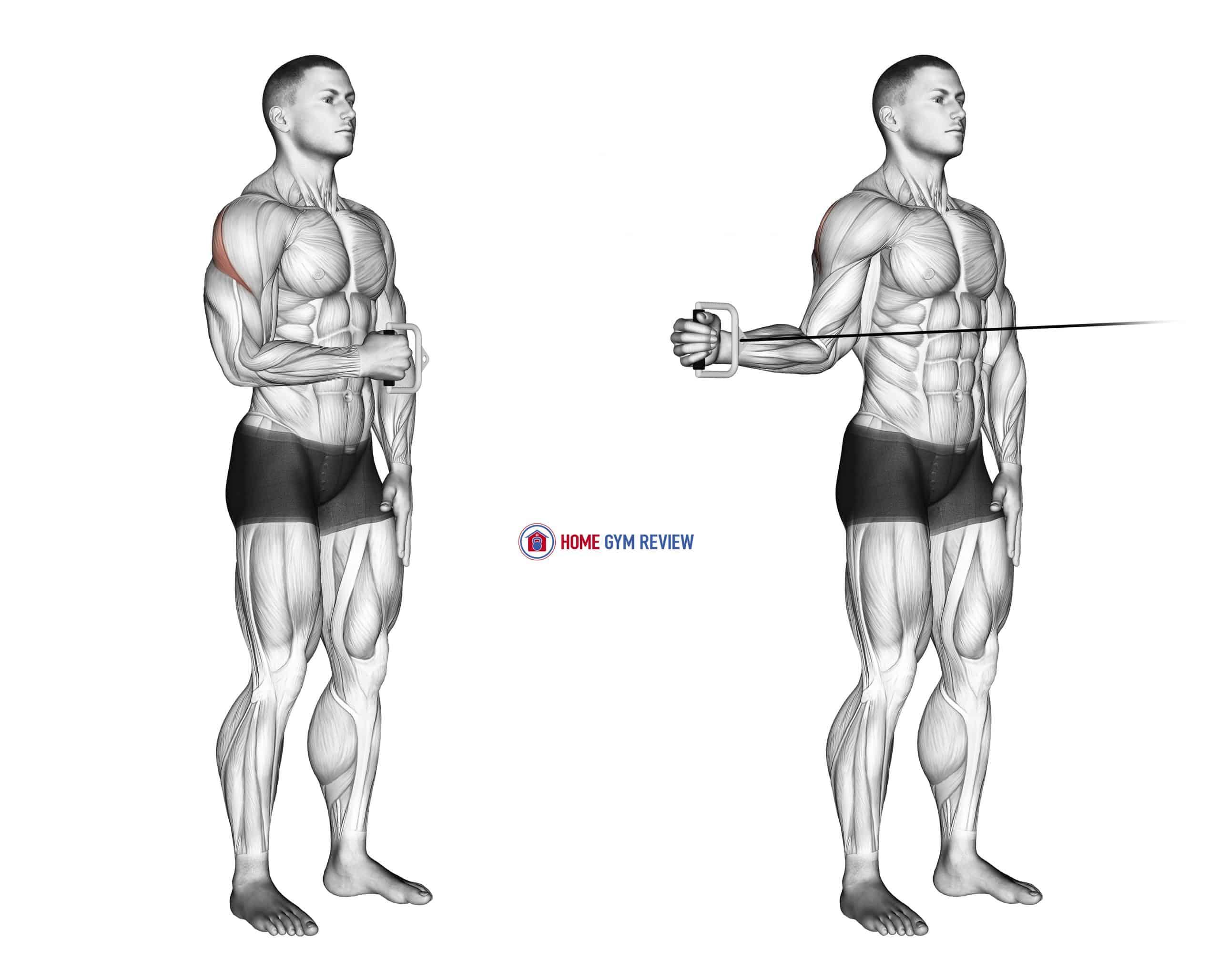 Cable Standing Shoulder External Rotation