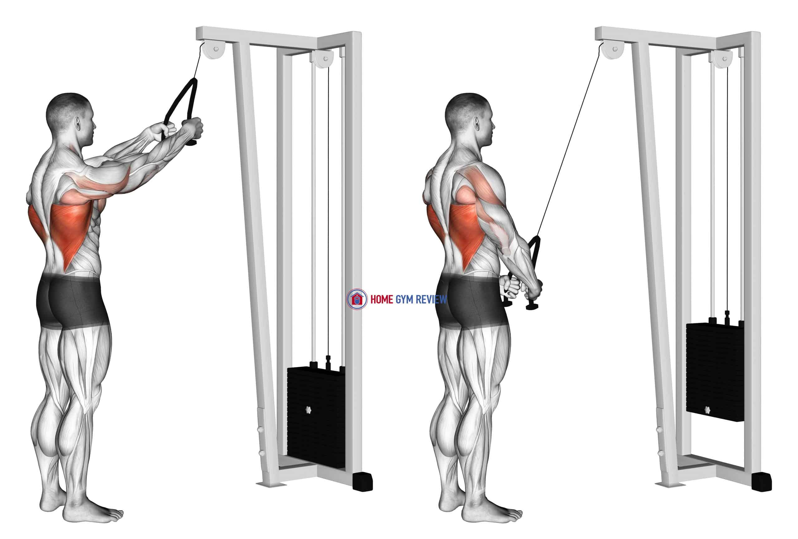 Cable Straight Arm Pulldown (with rope)