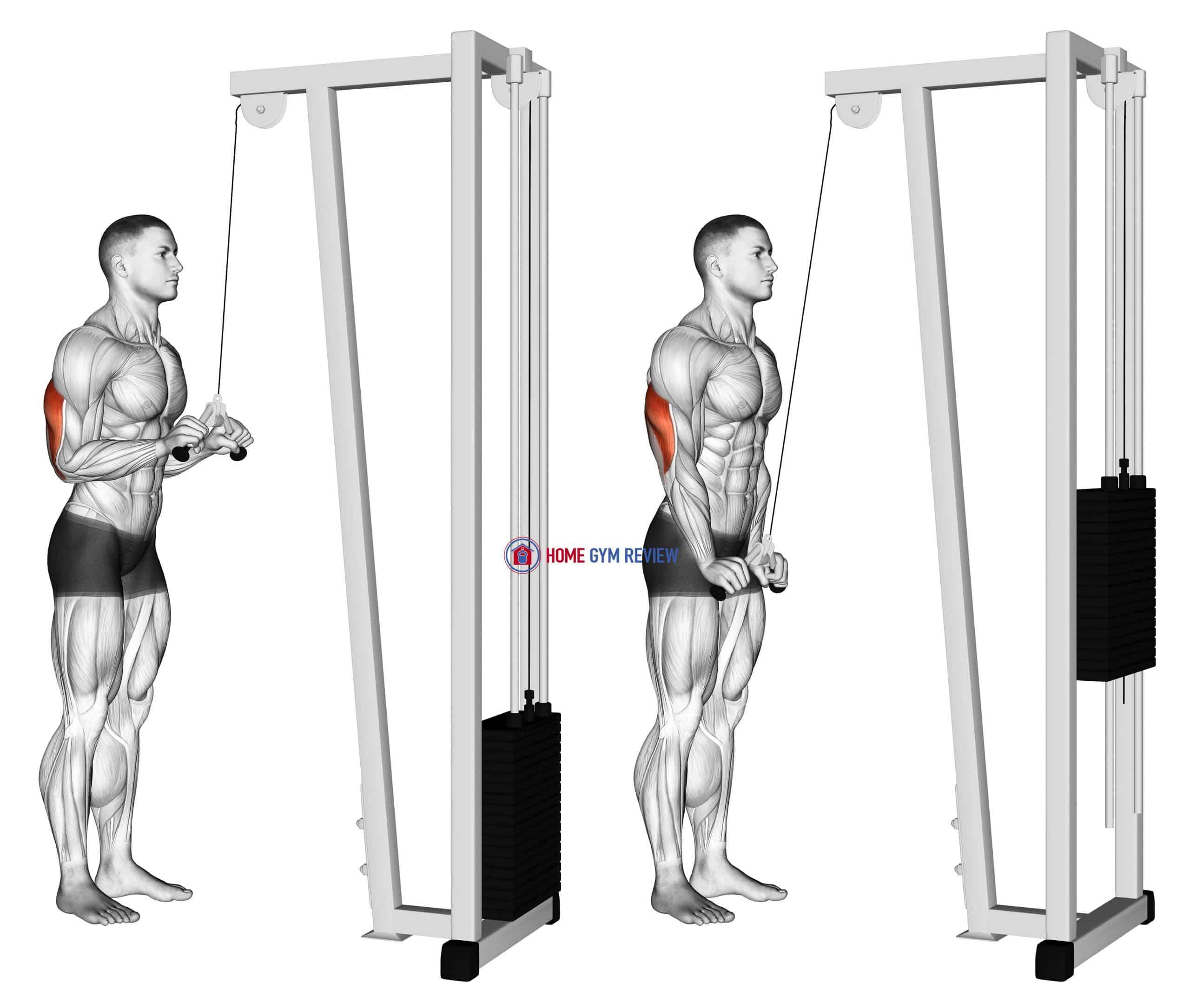 Cable Triceps Pushdown (V-bar)