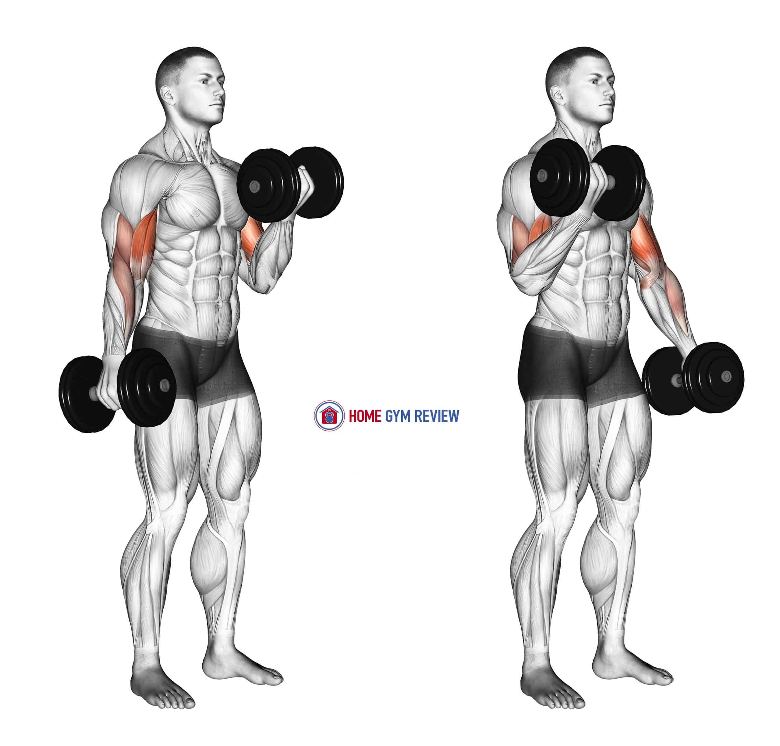 Dumbbell Alternate Biceps Curl