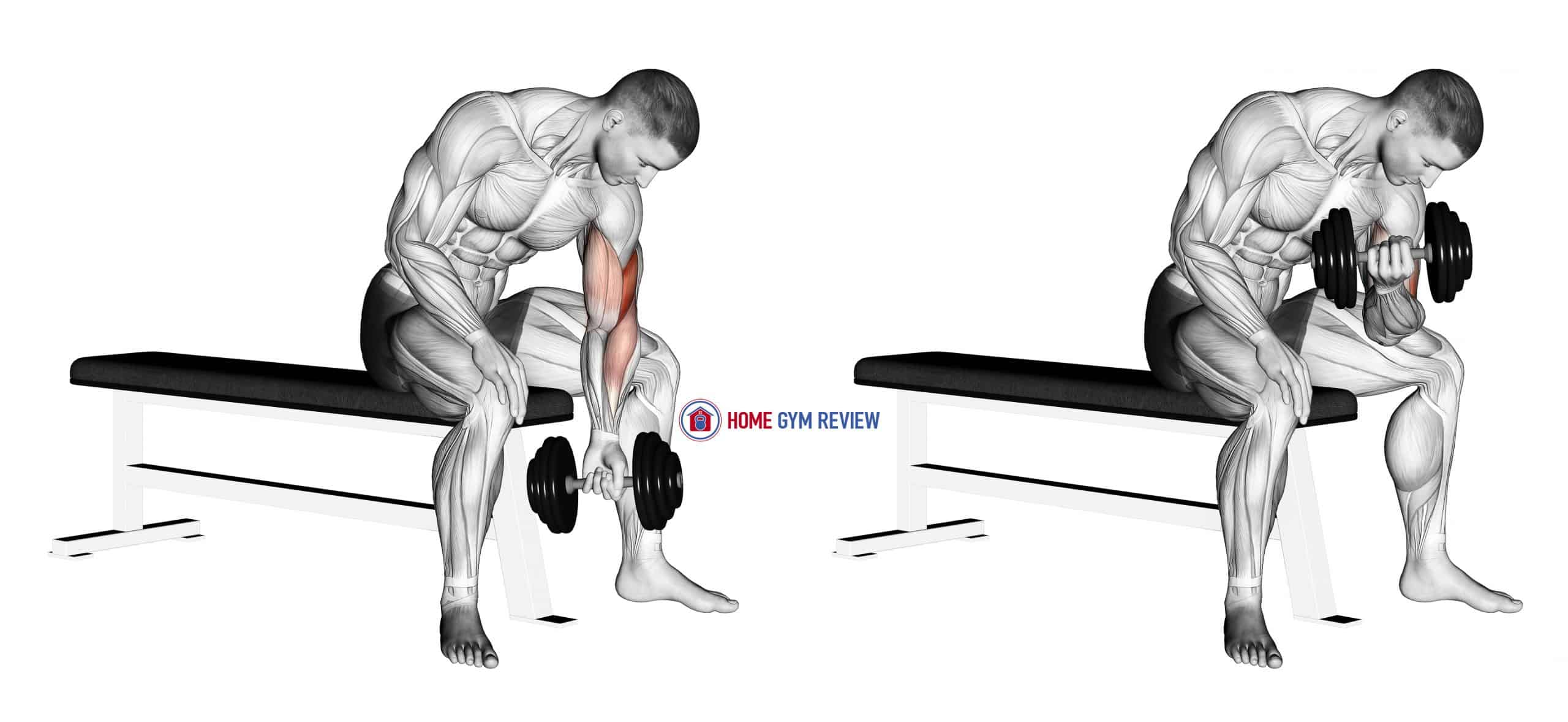 Dumbbell Concentration Curl