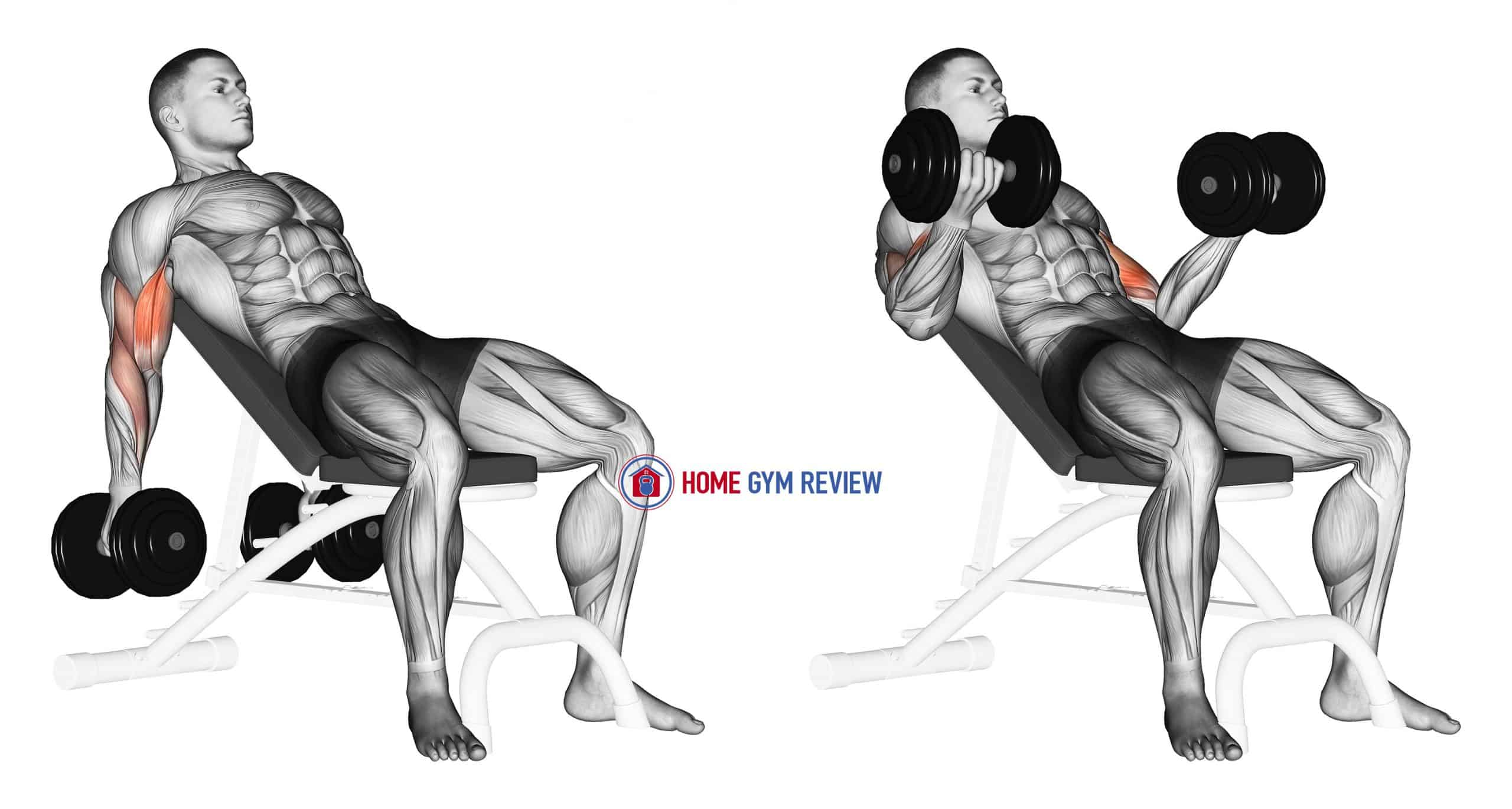 Dumbbell Incline Biceps Curl