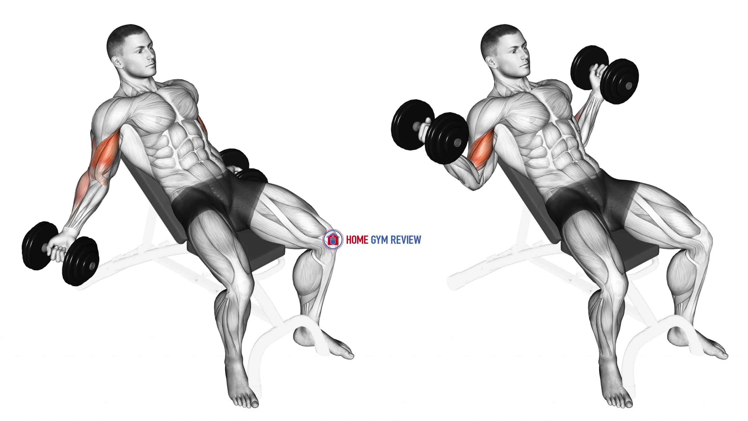 Dumbbell Incline Inner Biceps Curl
