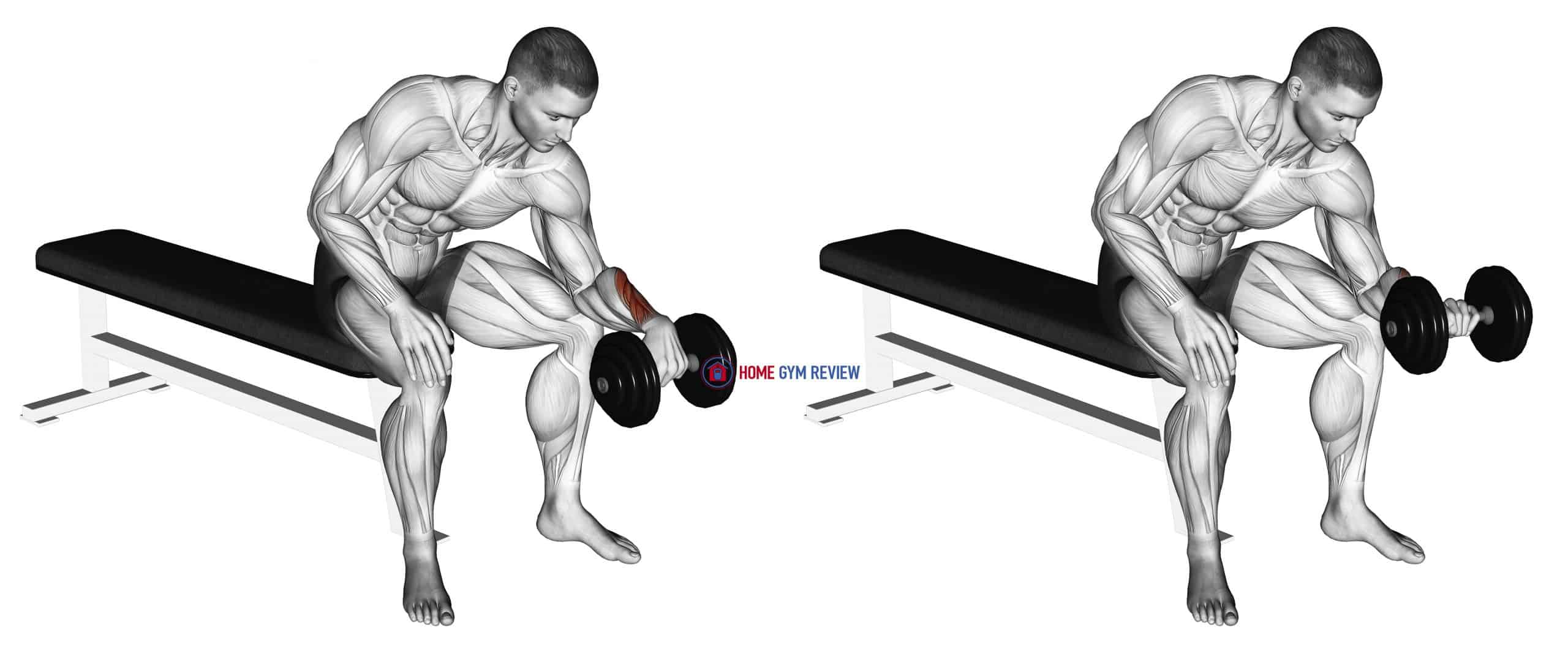 Dumbbell One arm Revers Wrist Curl