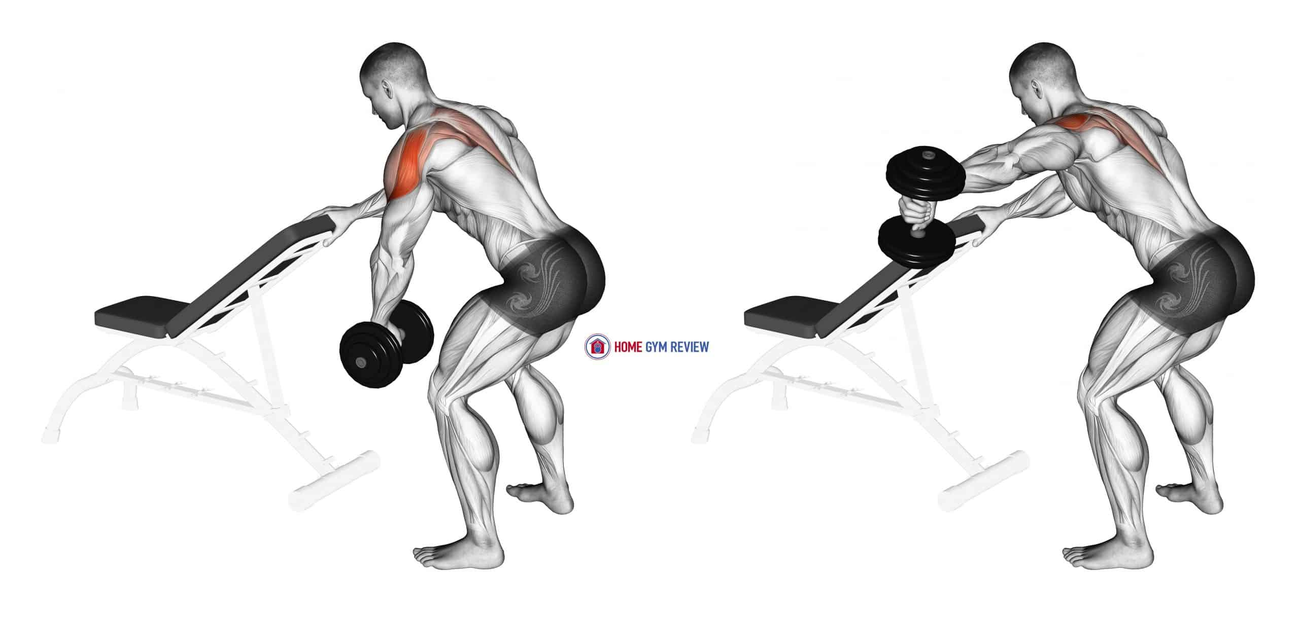 Dumbbell One Arm Reverse Fly (with support)