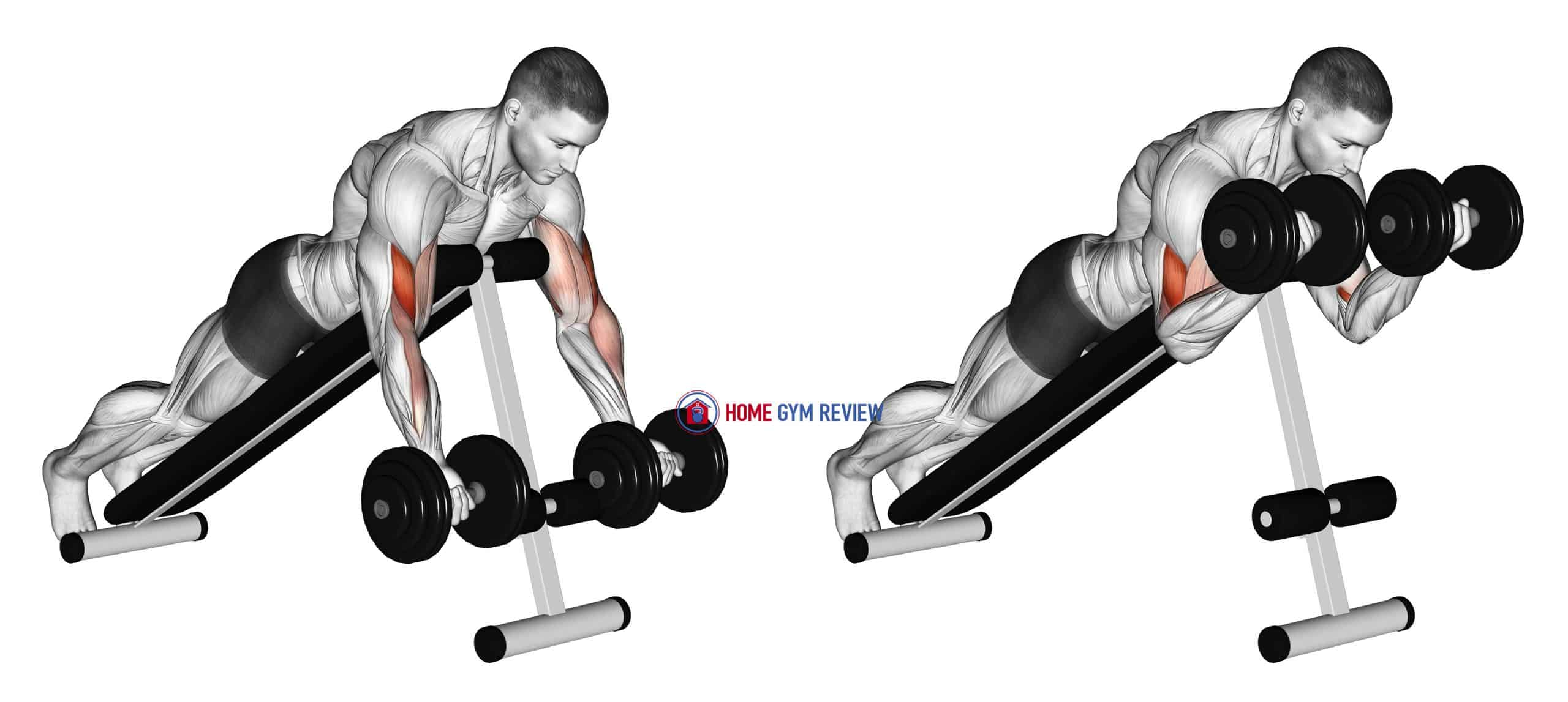 Dumbbell Prone Incline Curl