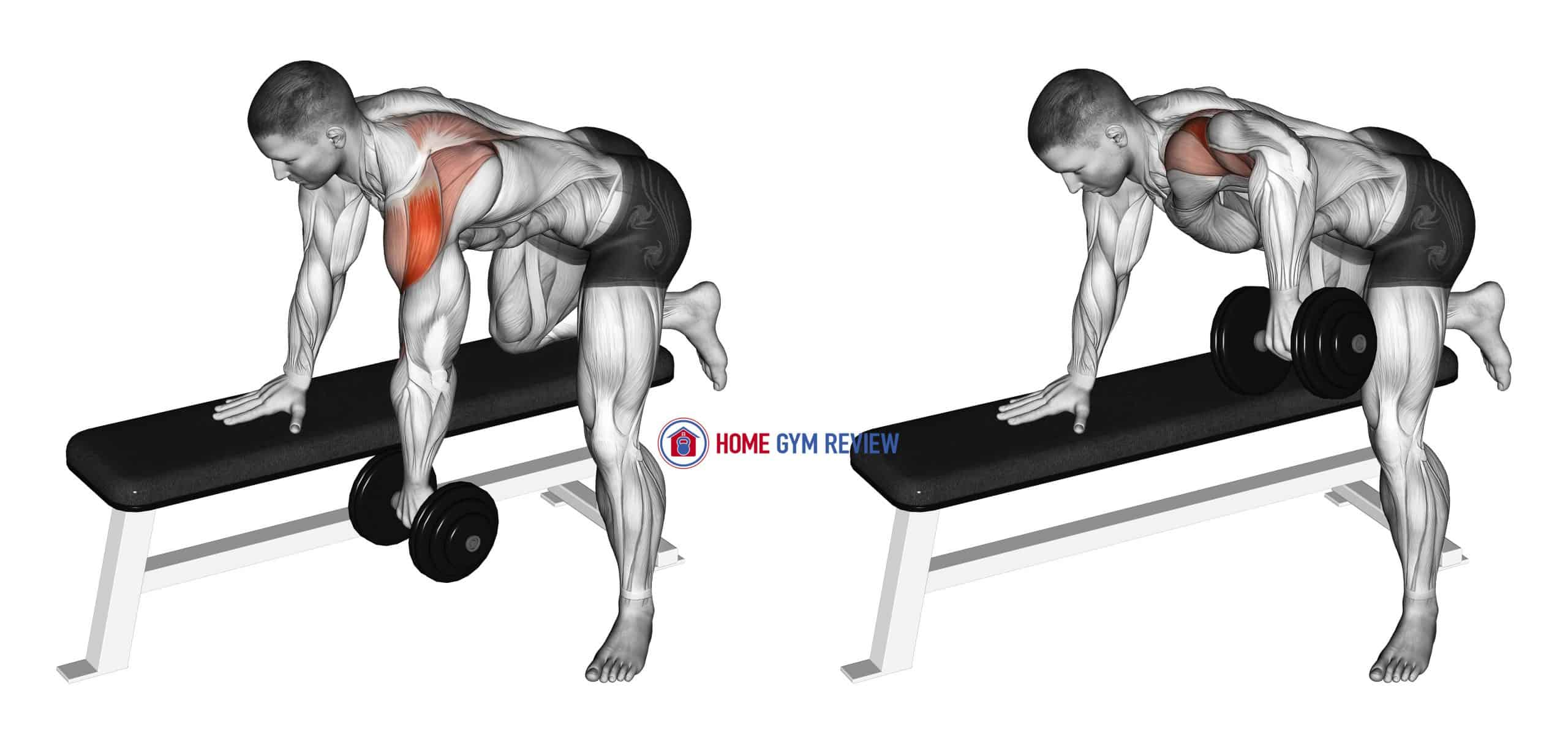 Dumbbell Rear Delt Row_shoulder