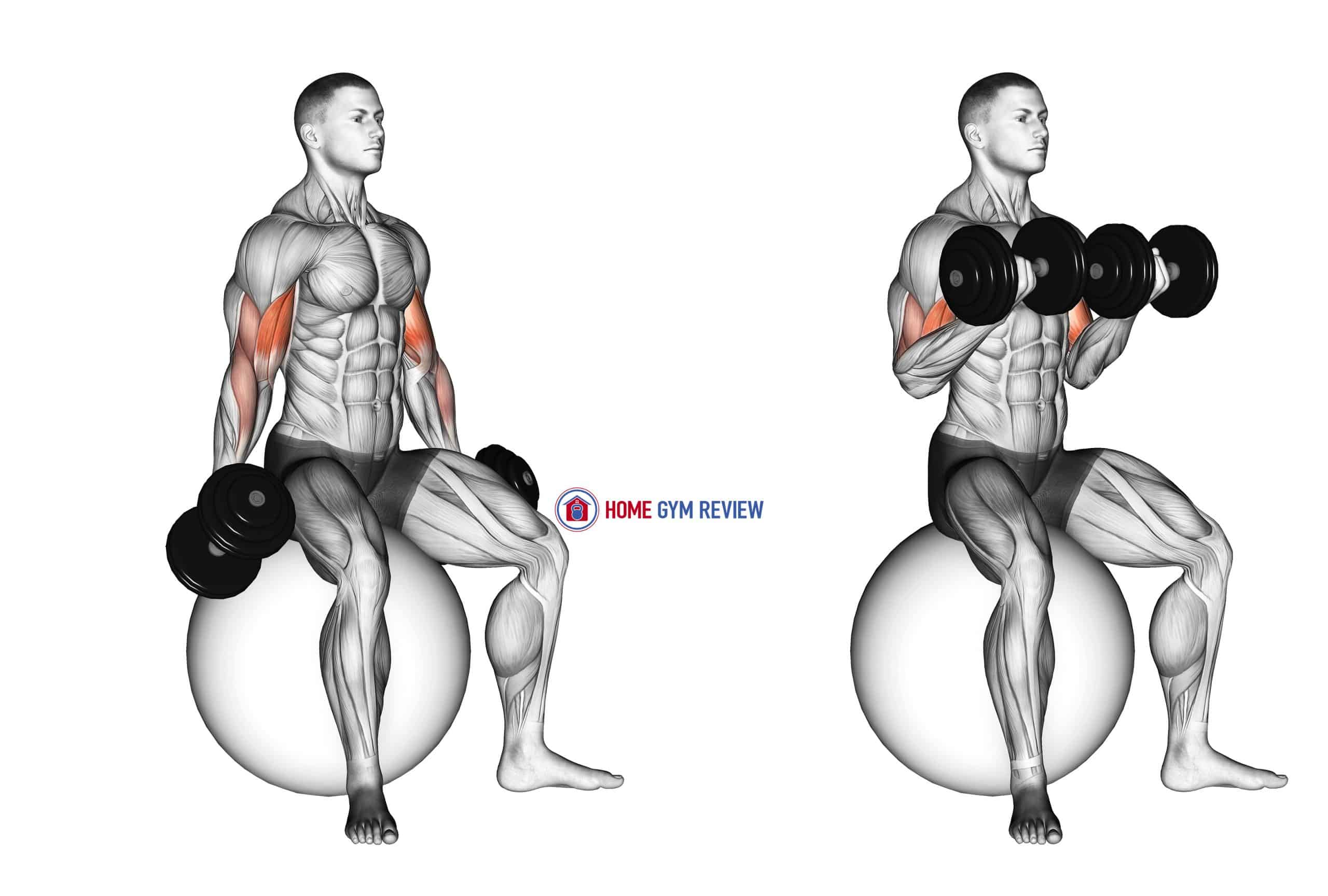 Dumbbell Seated Biceps Curl (on stability ball)