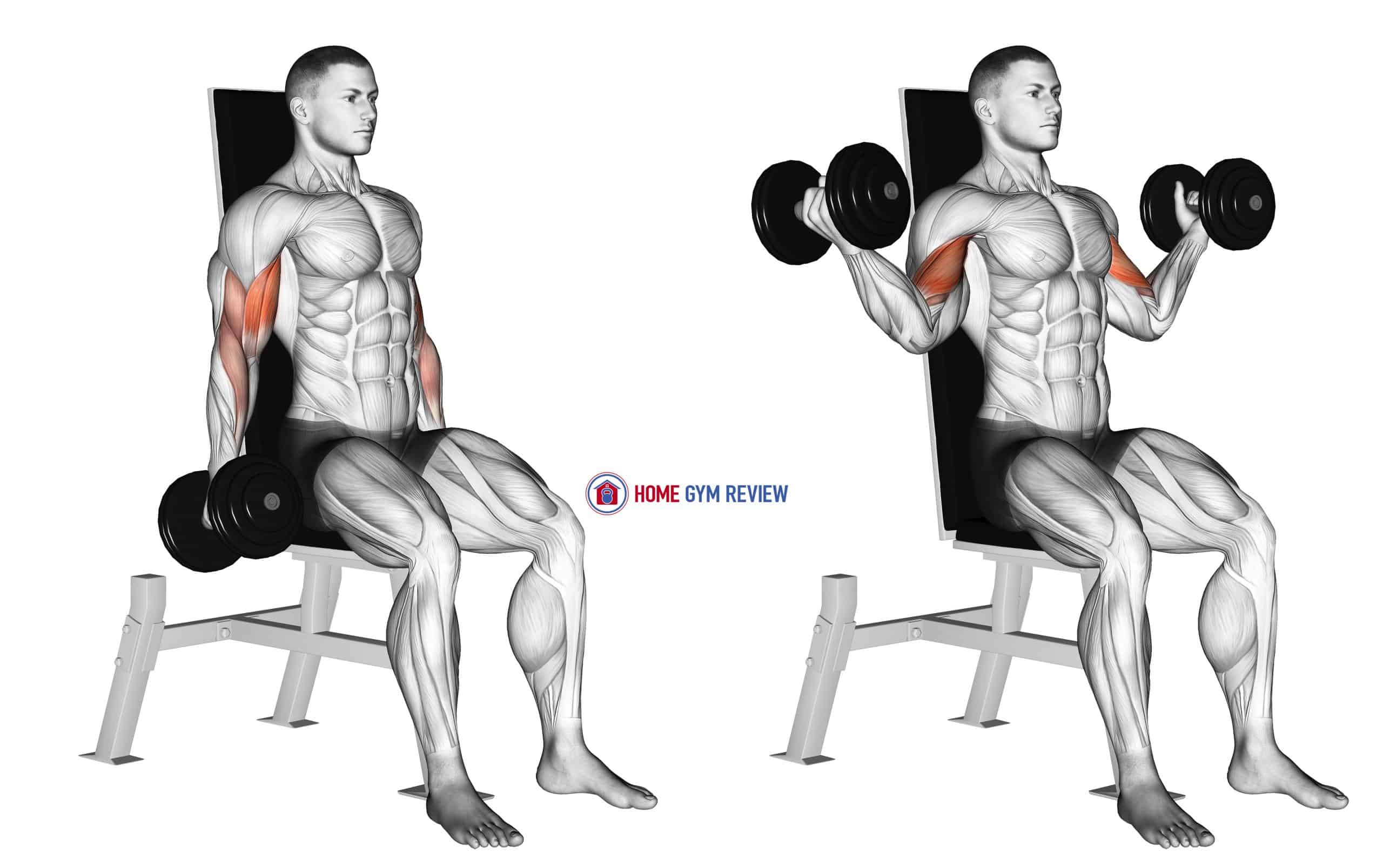 Dumbbell Seated Inner Biceps Curl