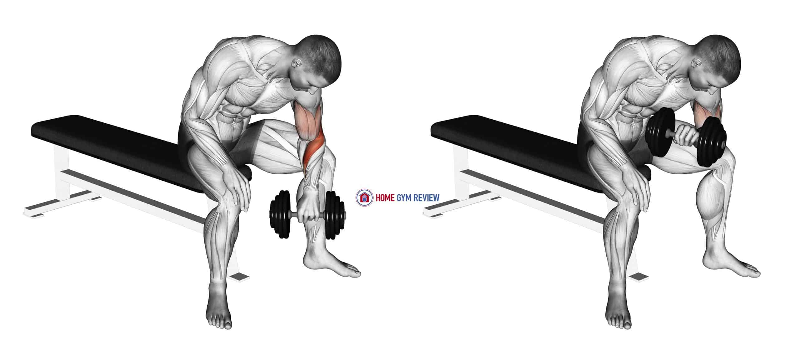 Dumbbell Seated Revers grip Concentration Curl