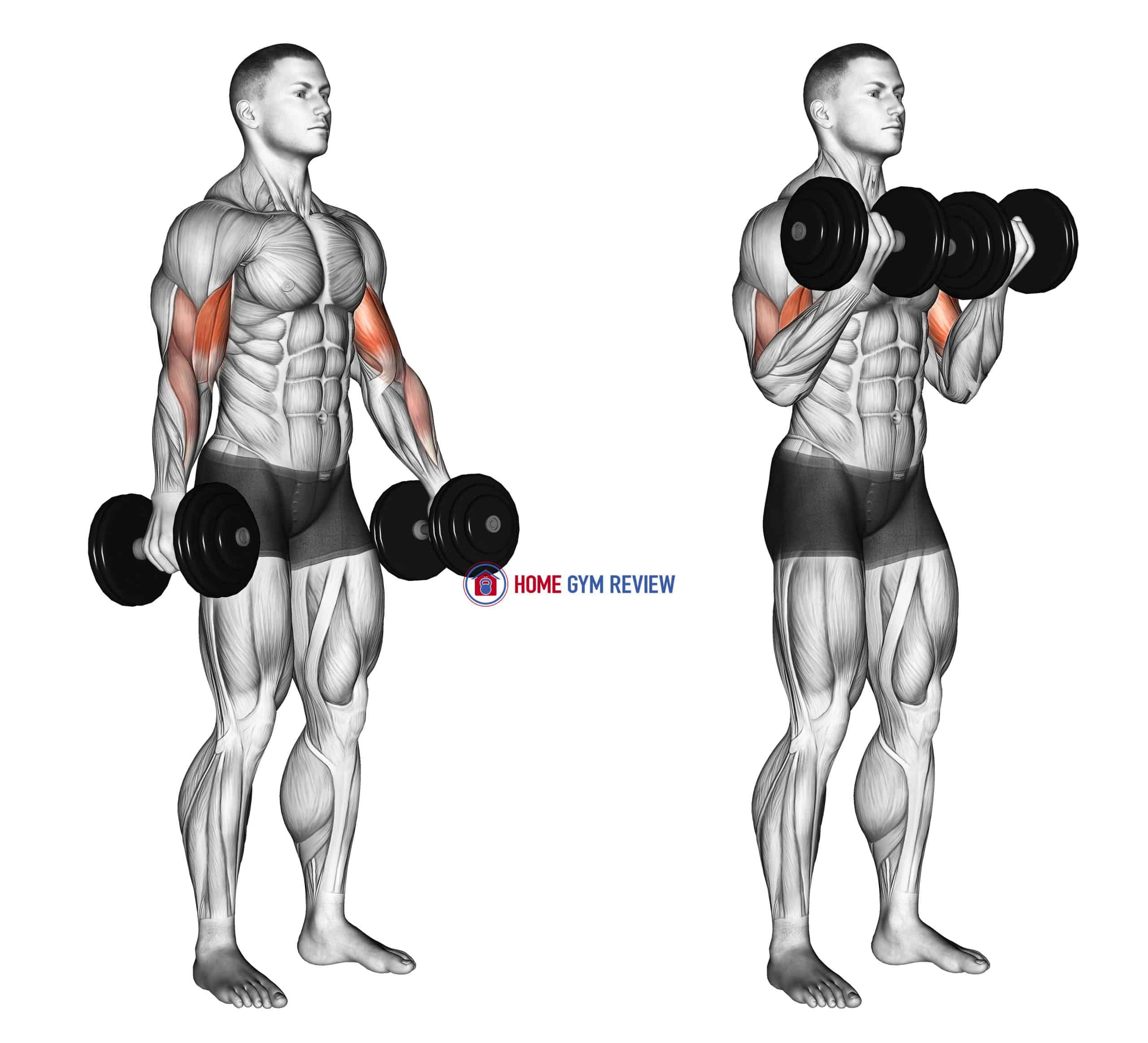 Dumbbell Standing Biceps Curl