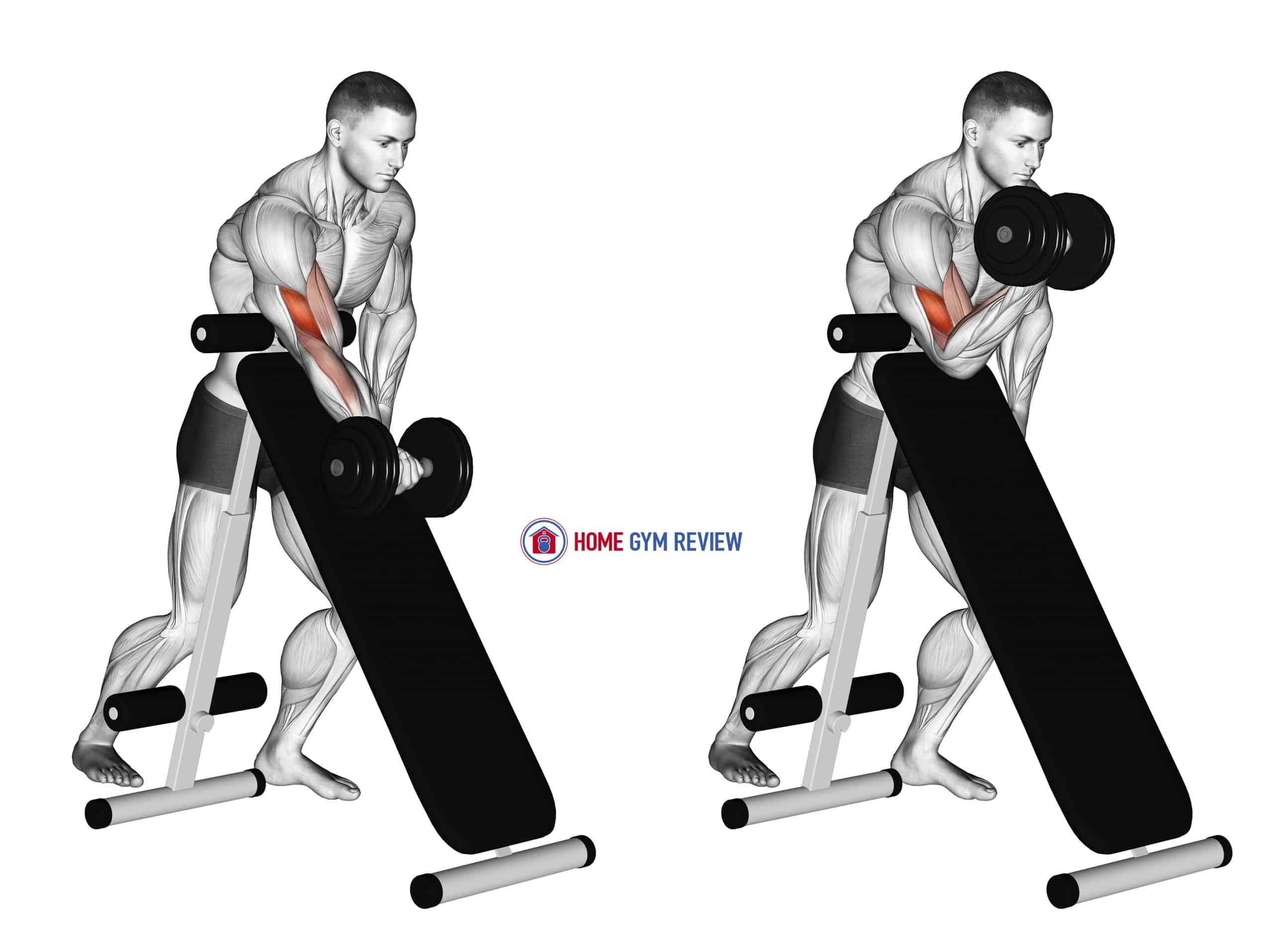 Dumbbell Standing One Arm Curl (over incline bench)
