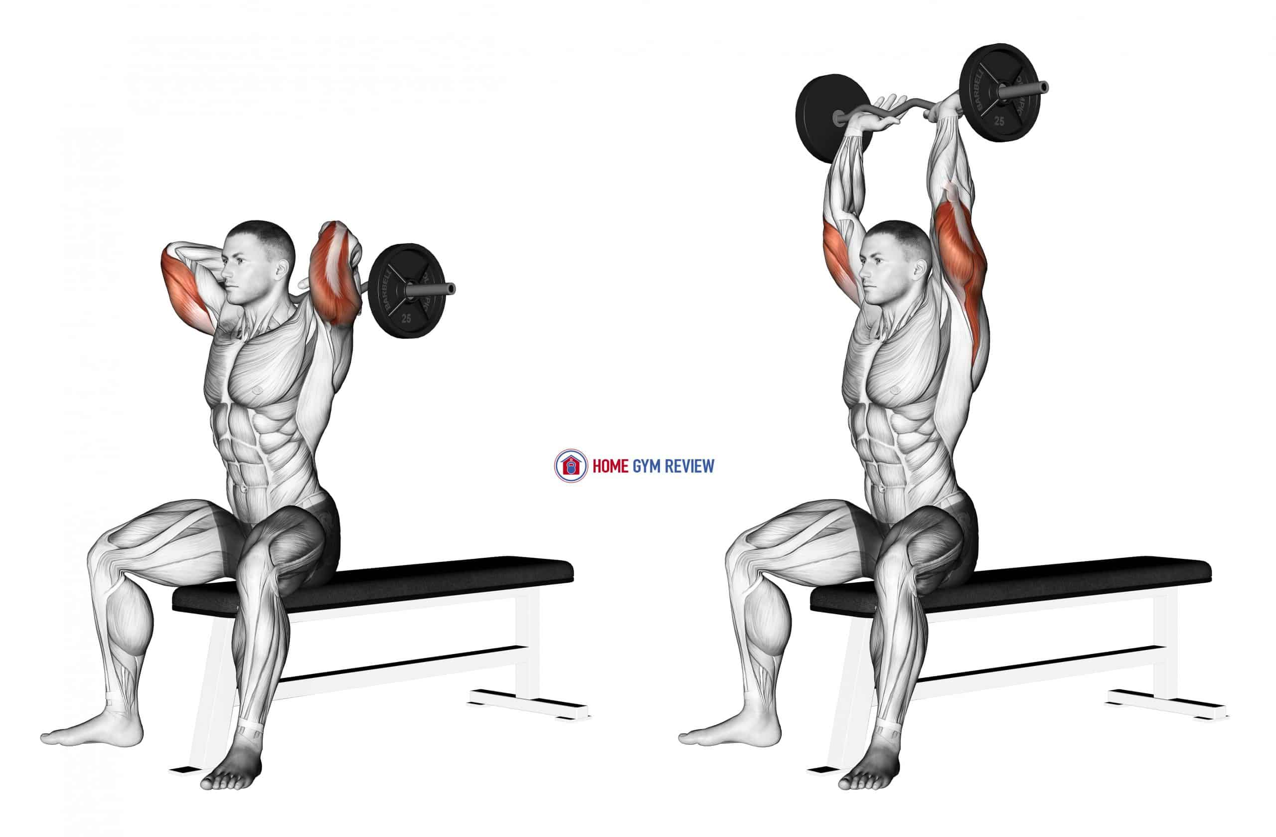 EZ Barbell Seated Triceps Extension