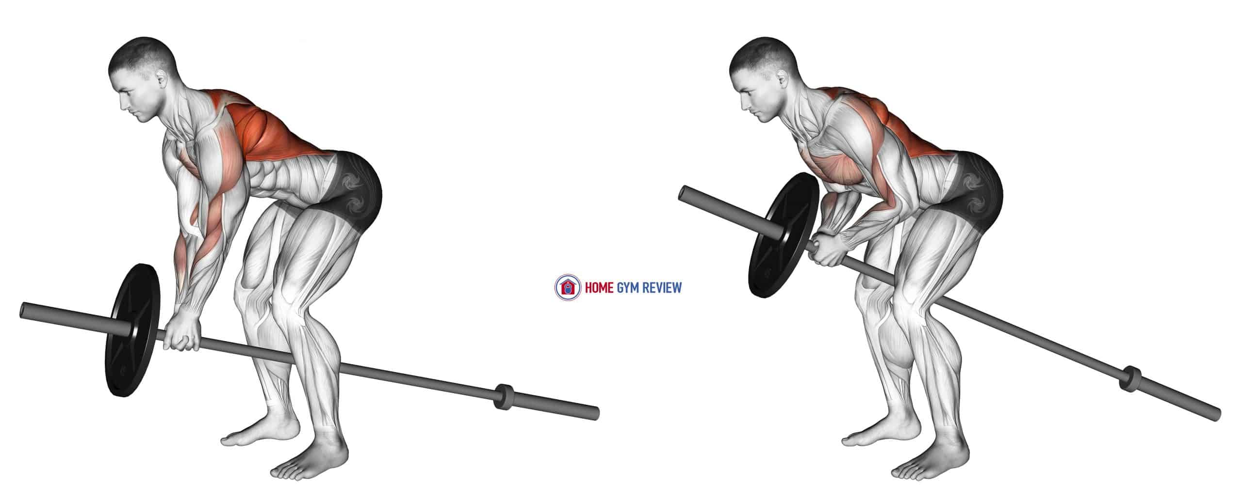 Lever Bent over Row (plate loaded)