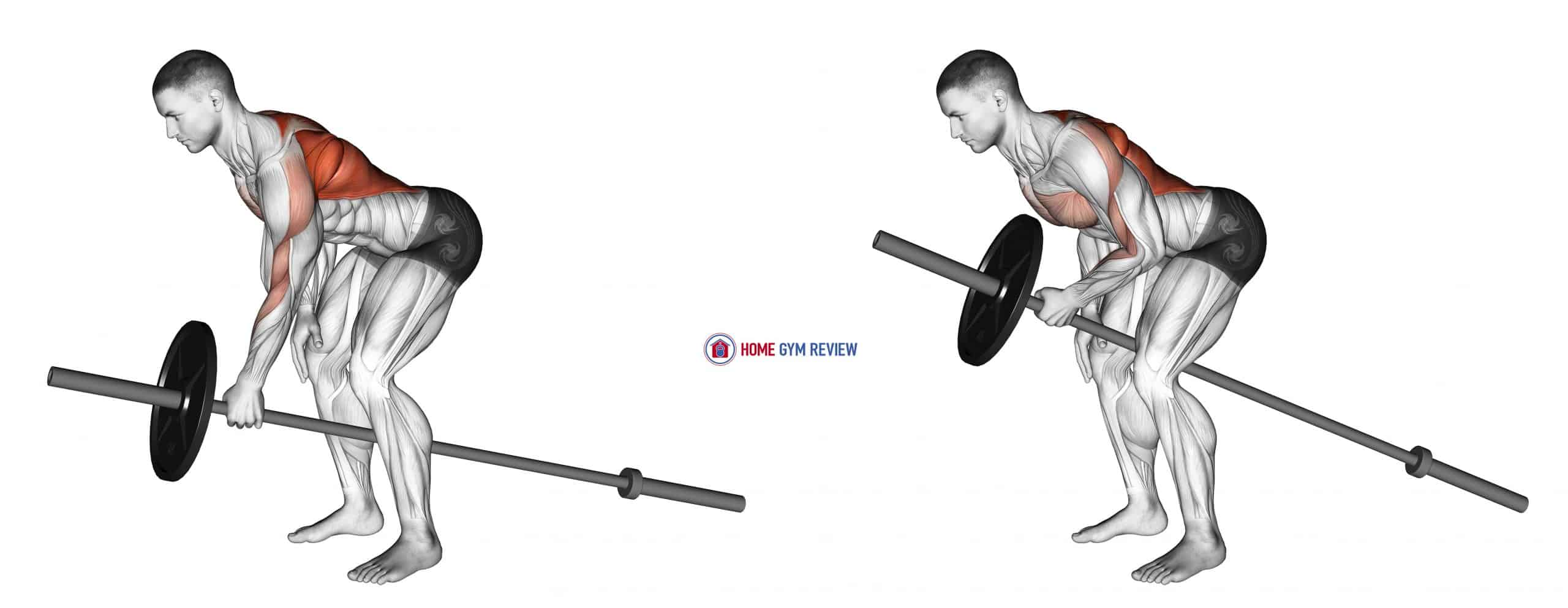 Lever One Arm Bent over Row (plate loaded)