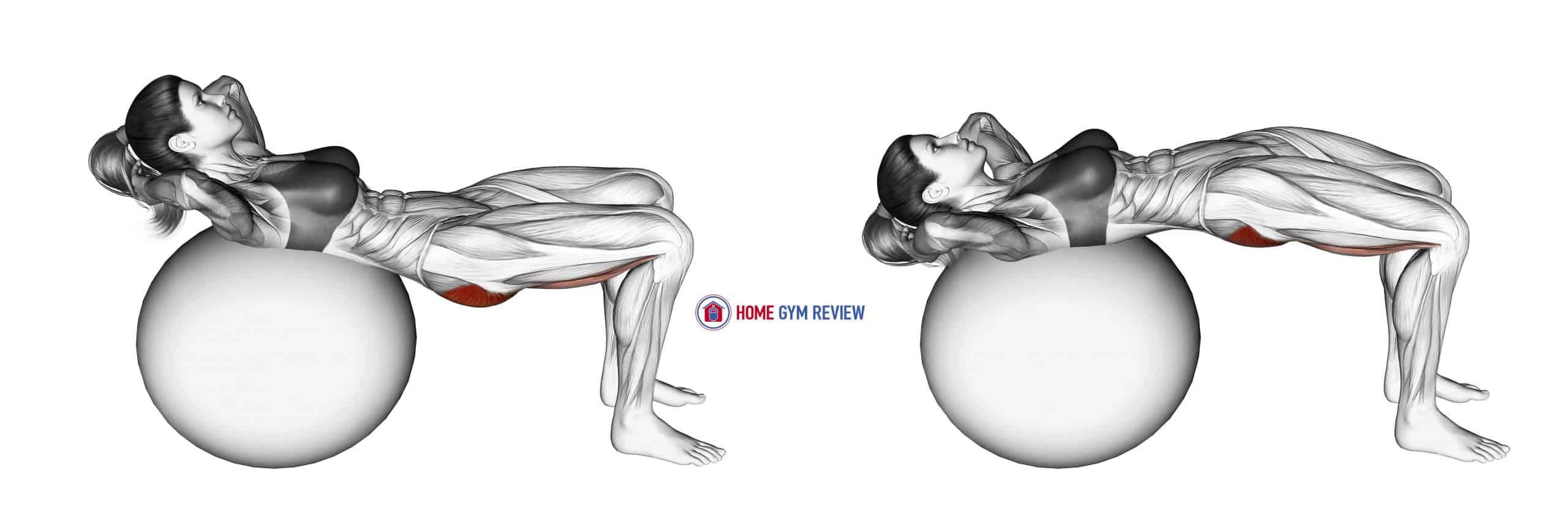 Lying Hip Lift (on stability ball)