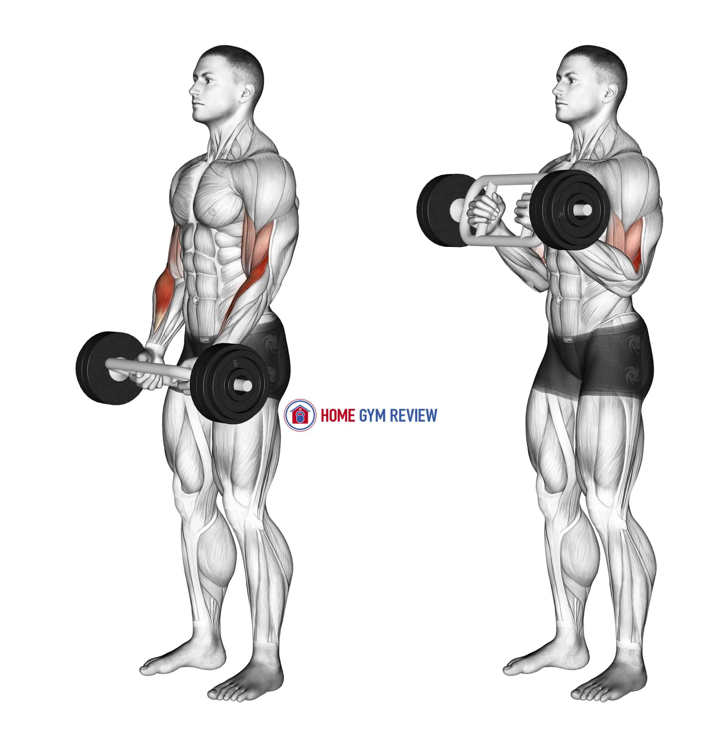 Olympic Barbell Hammer Curl