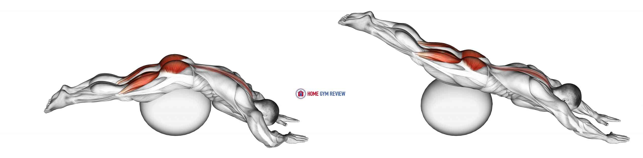 Reverse Hyper extension (on stability ball)