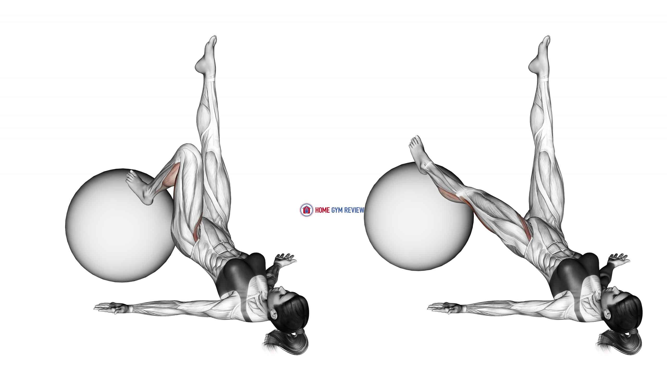 Single Leg Extension (on stability ball)