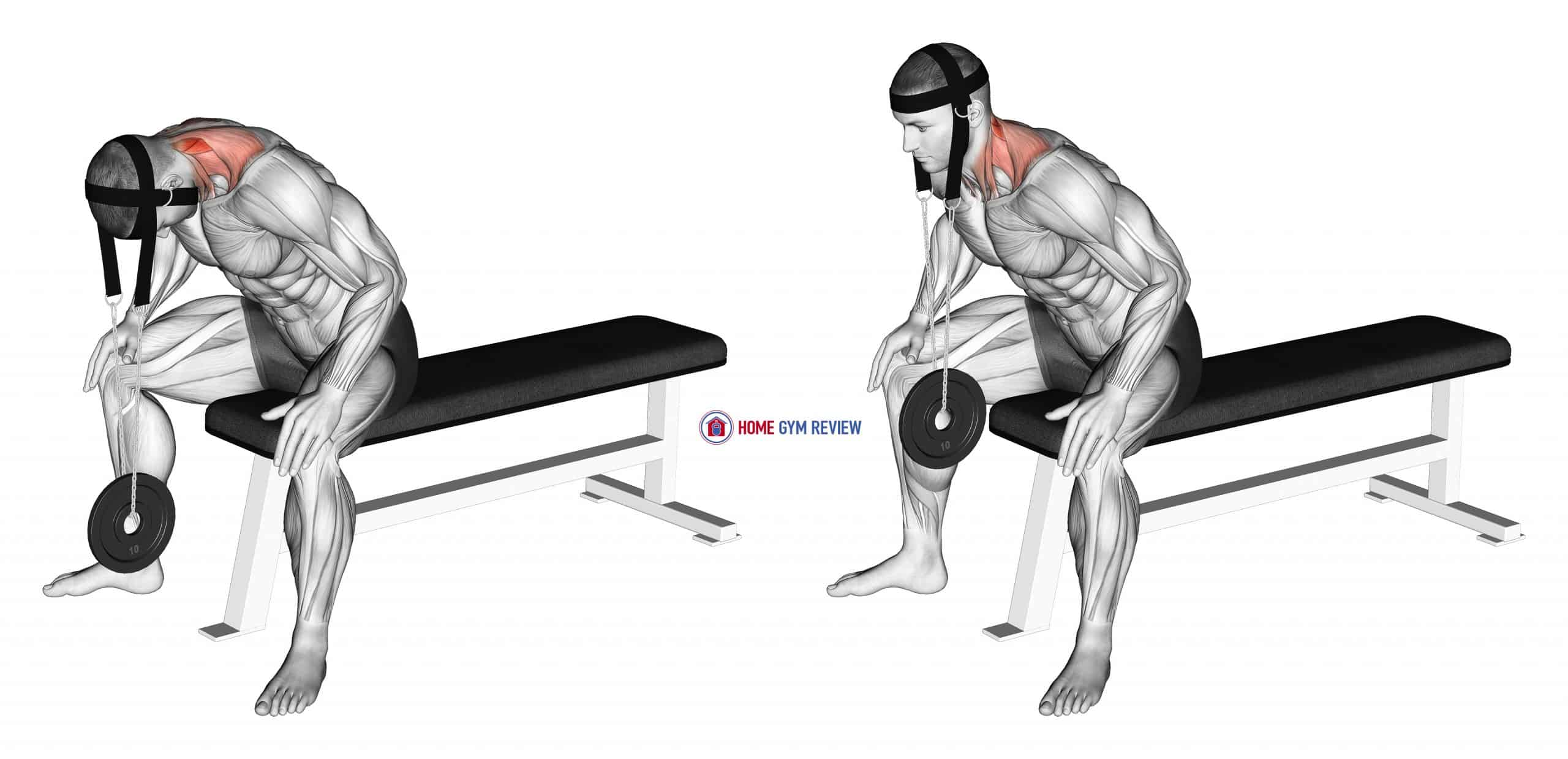 Weighted Seated Neck Extension (with head harness)