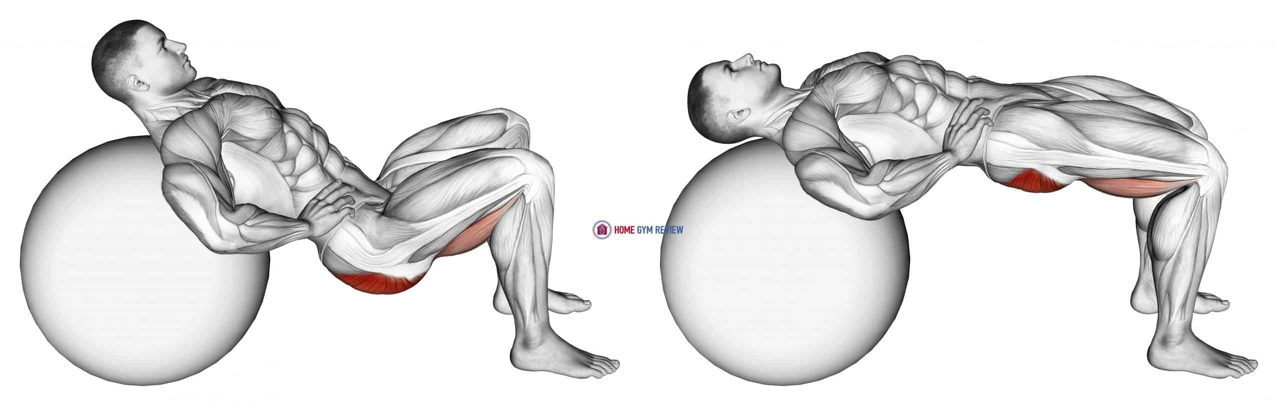 Lying Hip Lift (on stability ball) II