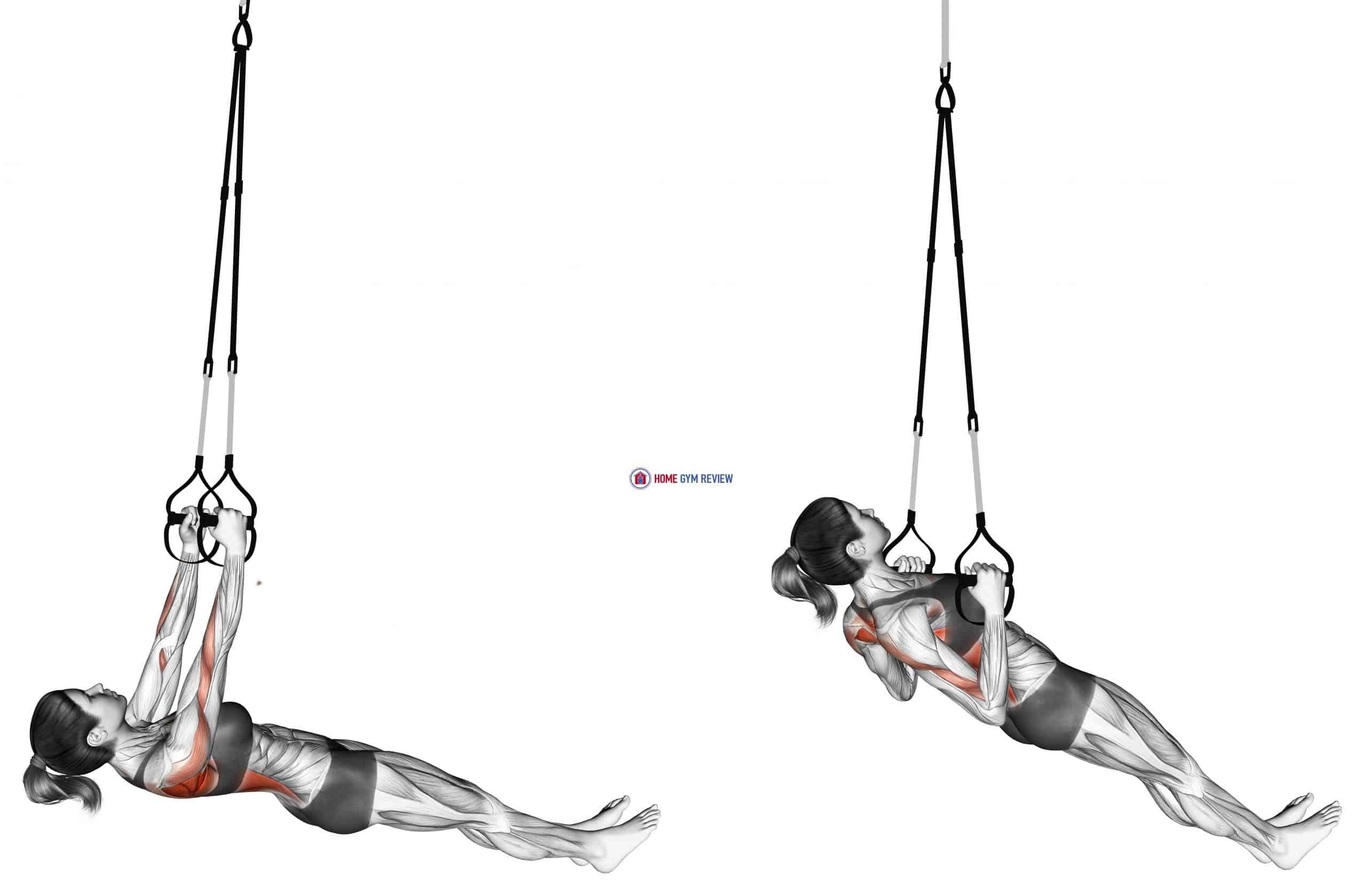 Suspension Inverted Row