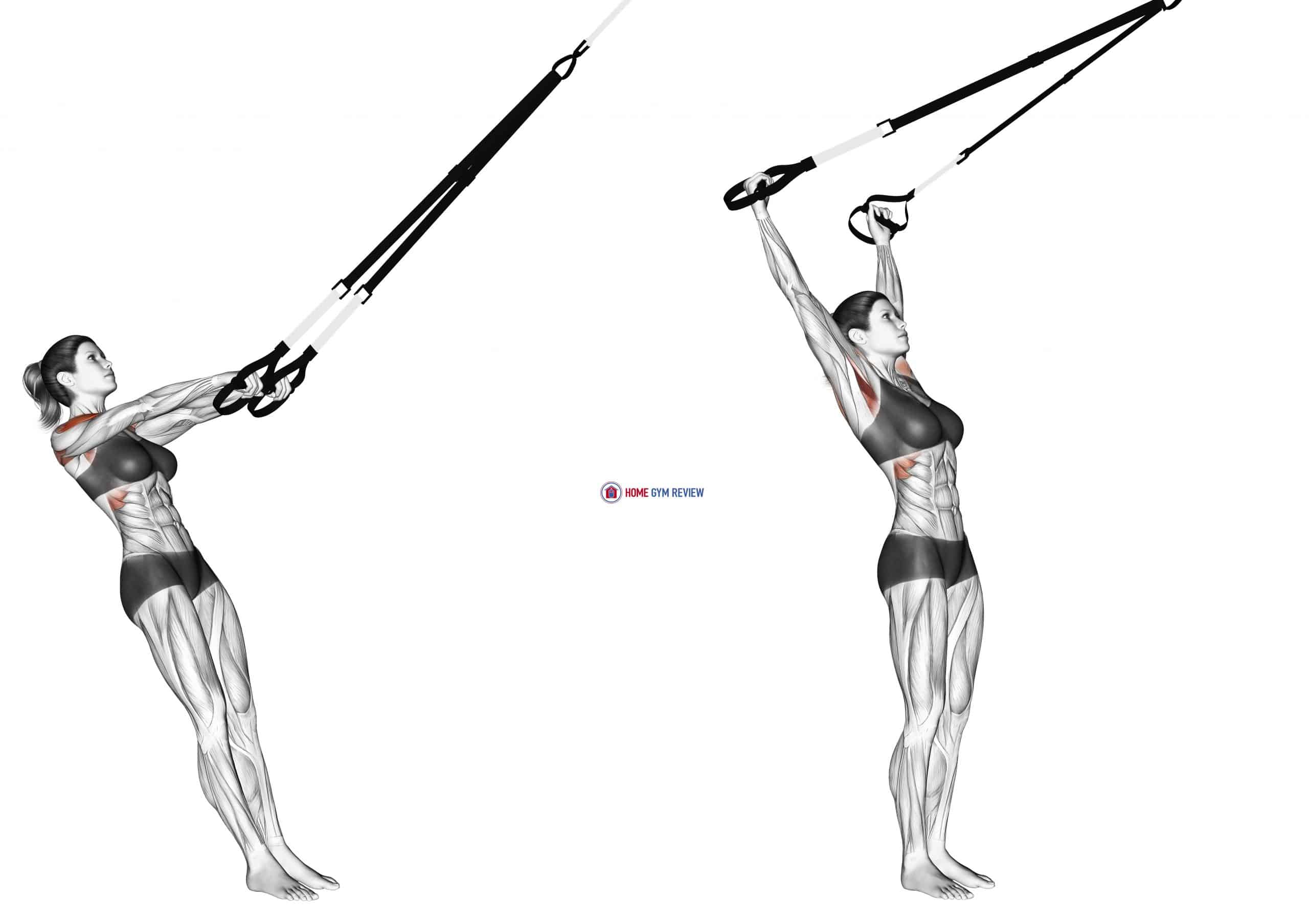 Suspension Y Lateral Raise