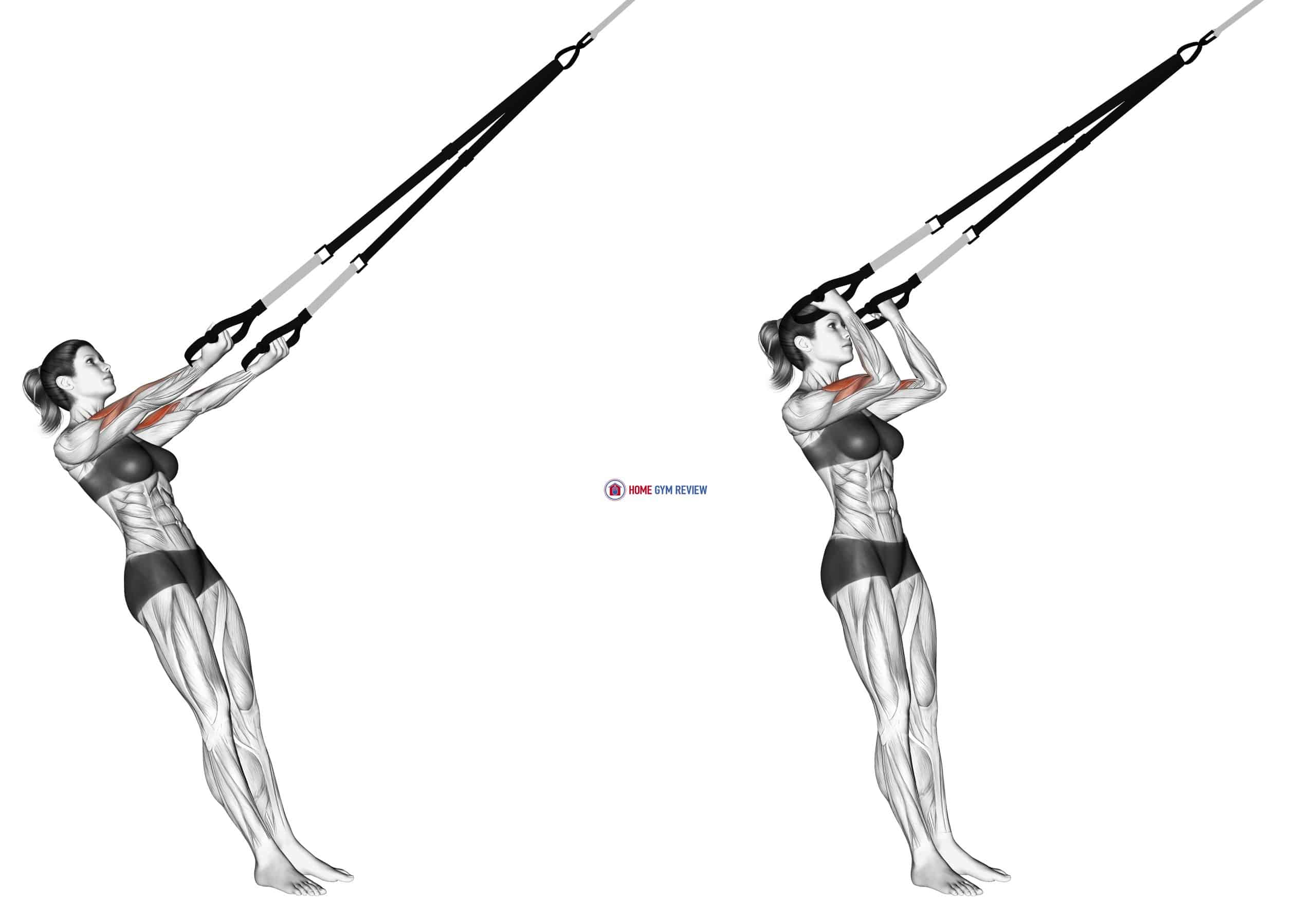 Suspension Arm Curl-to-Ears