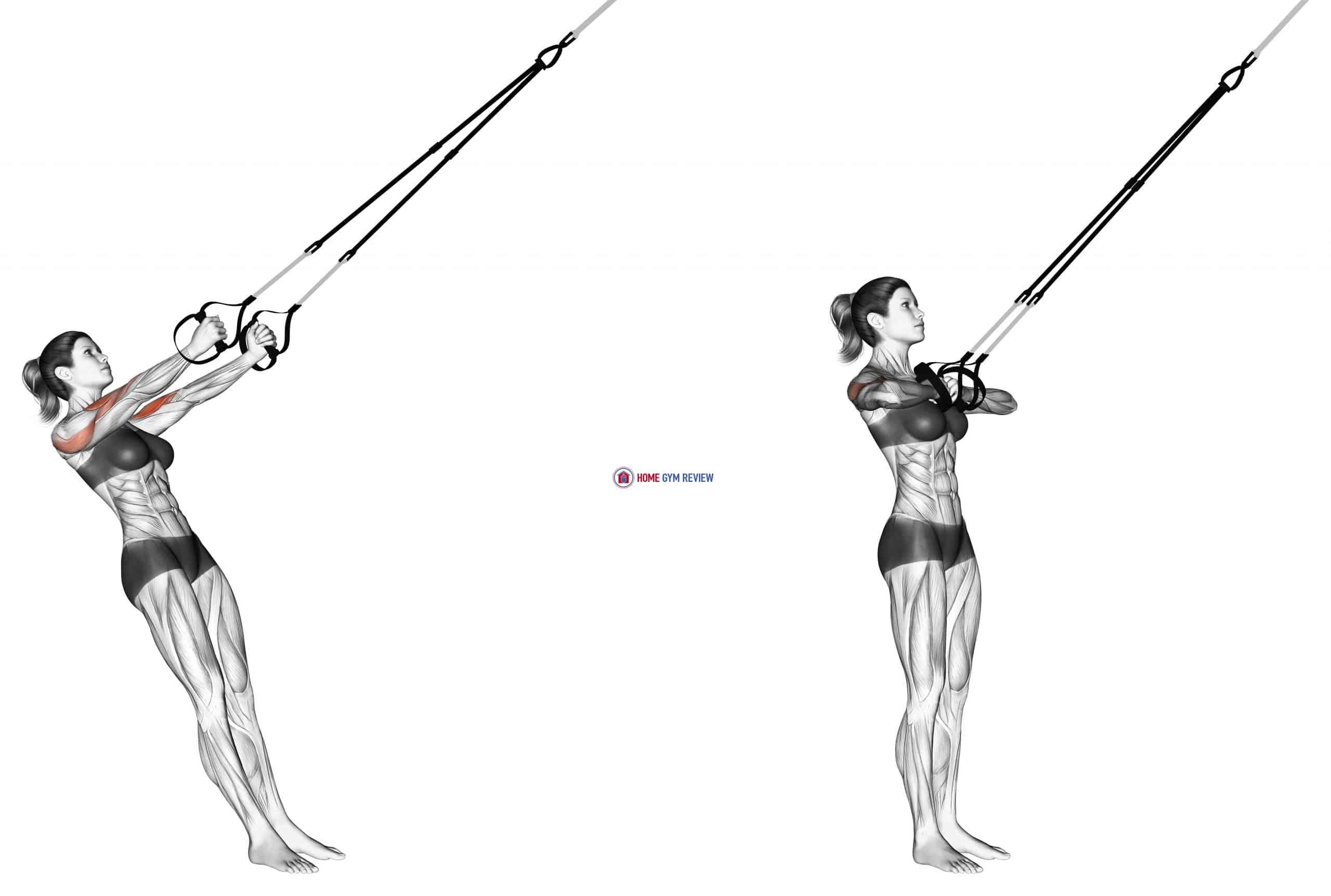 Suspension Biceps Clutch