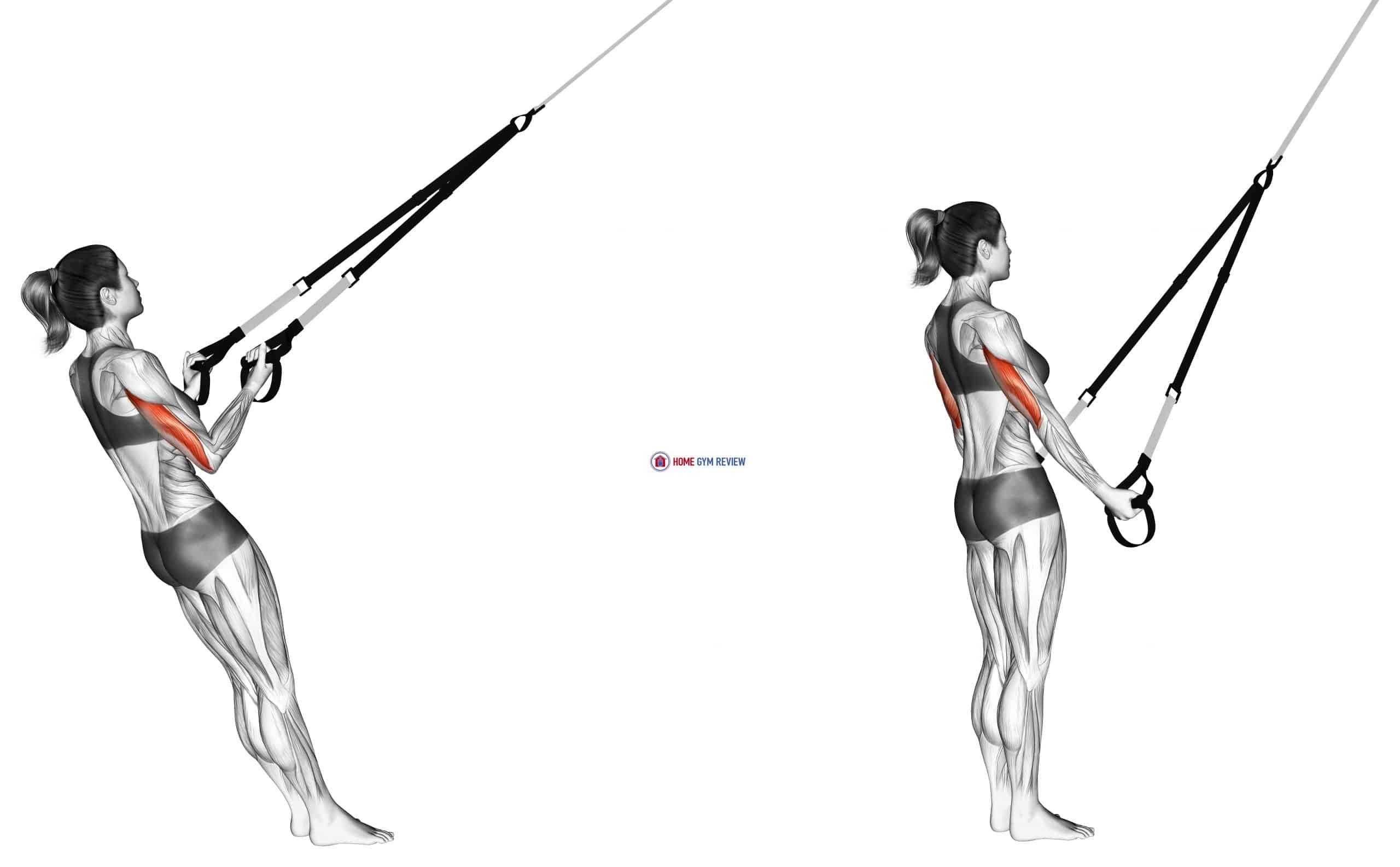 Suspension Triceps Kickback