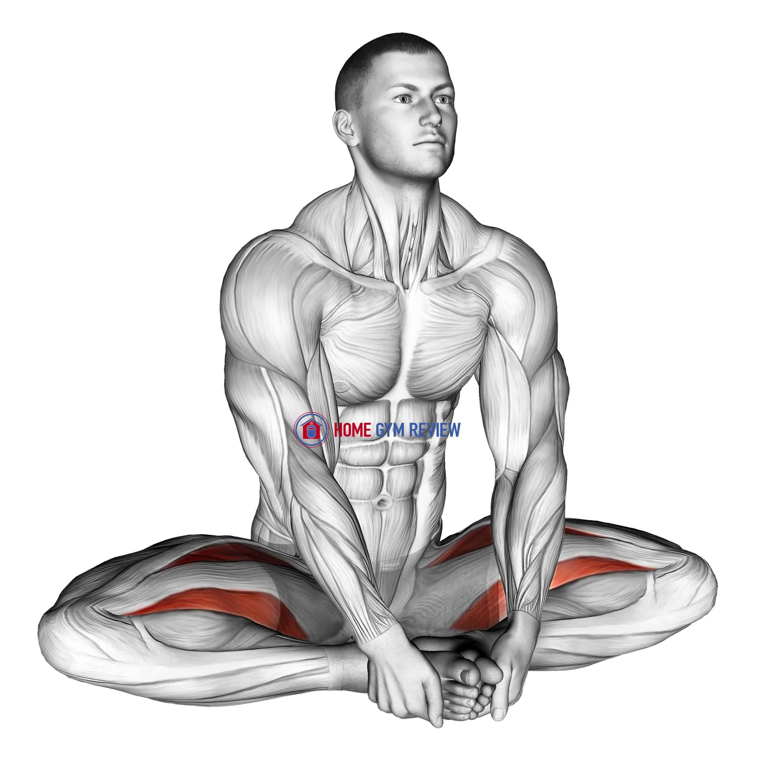 Seated Groin Stretch (male)