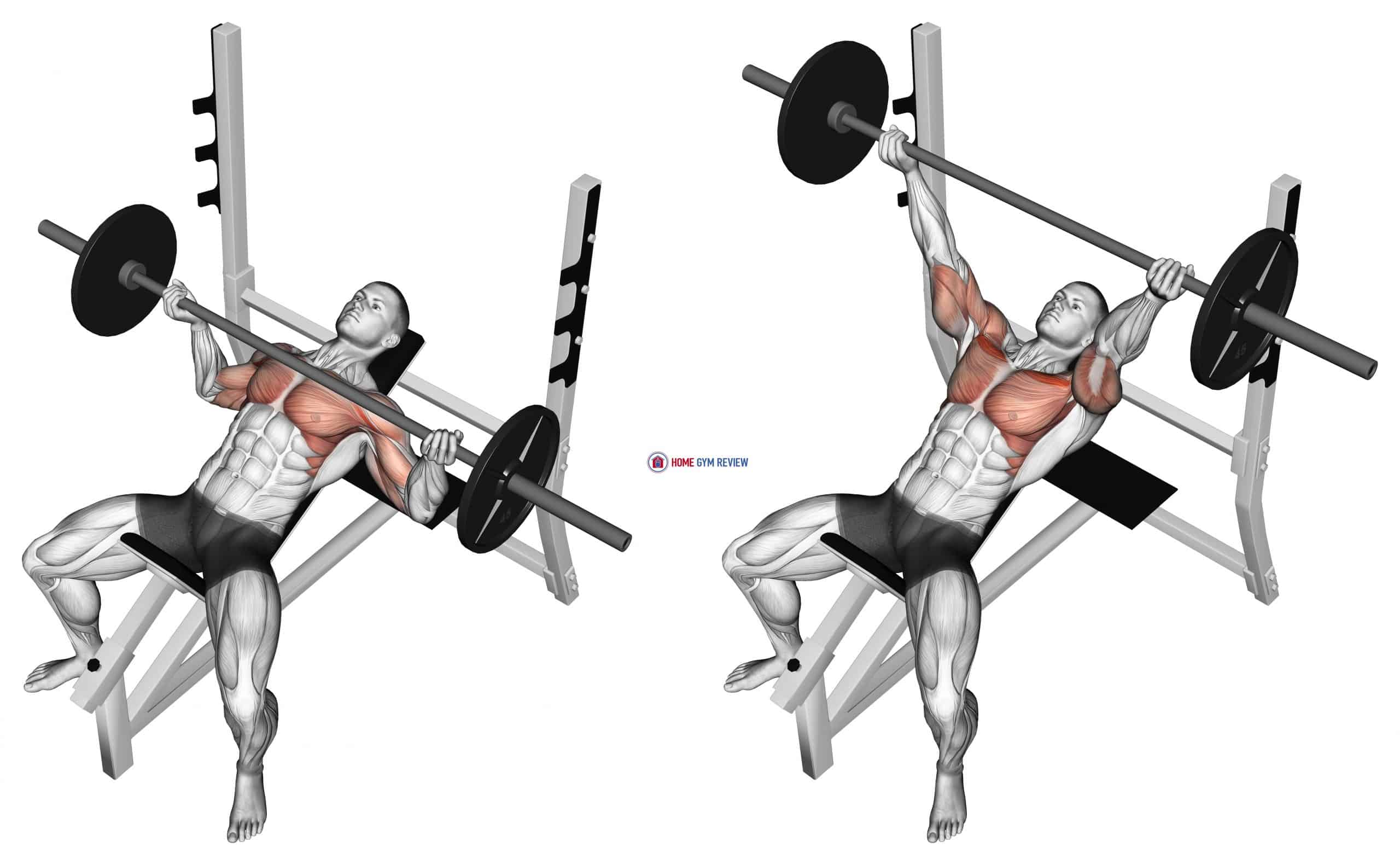 Barbell Incline Wide Reverse-grip Bench Press