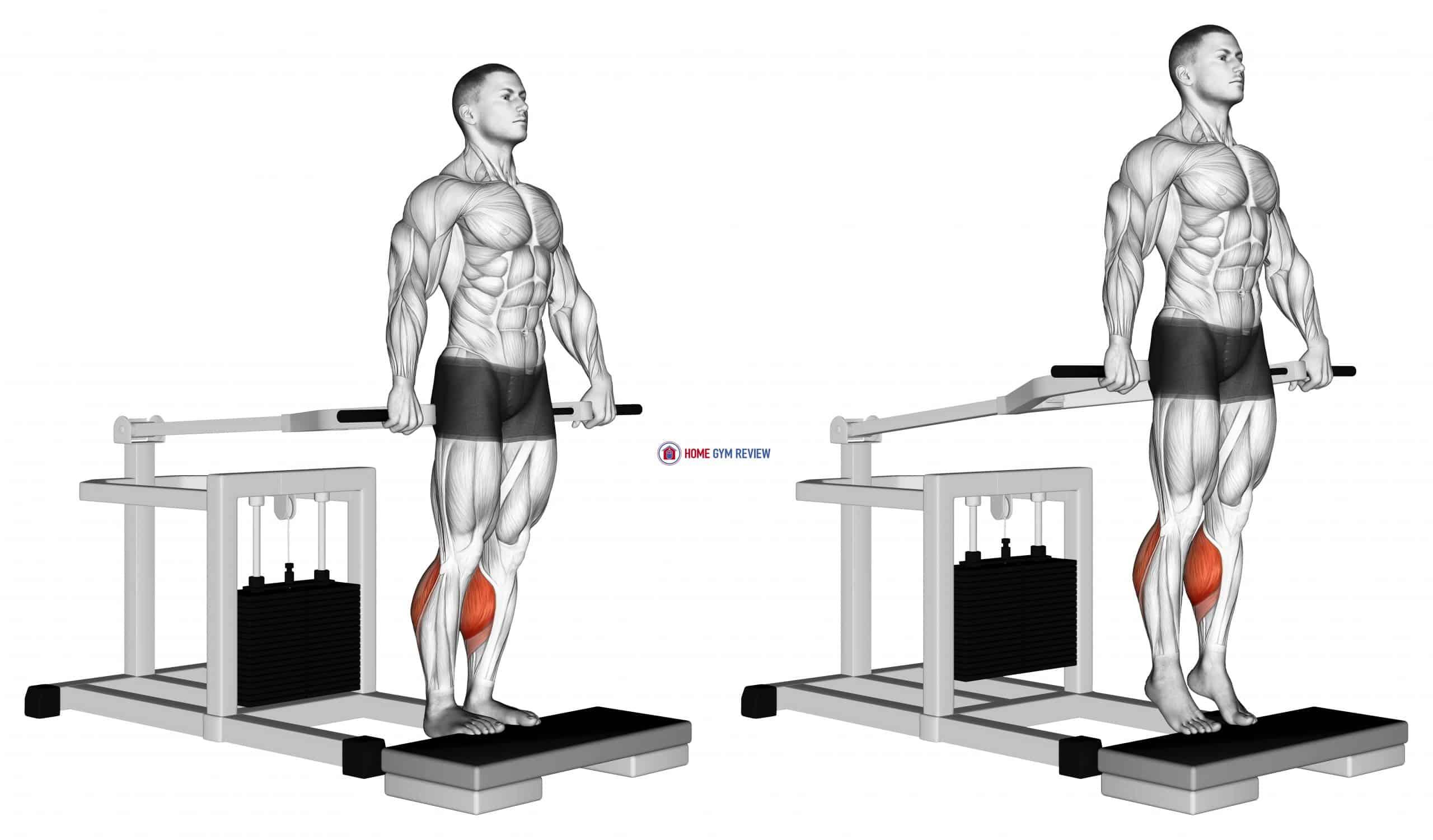 Lever Calf Raise (bench press machine)