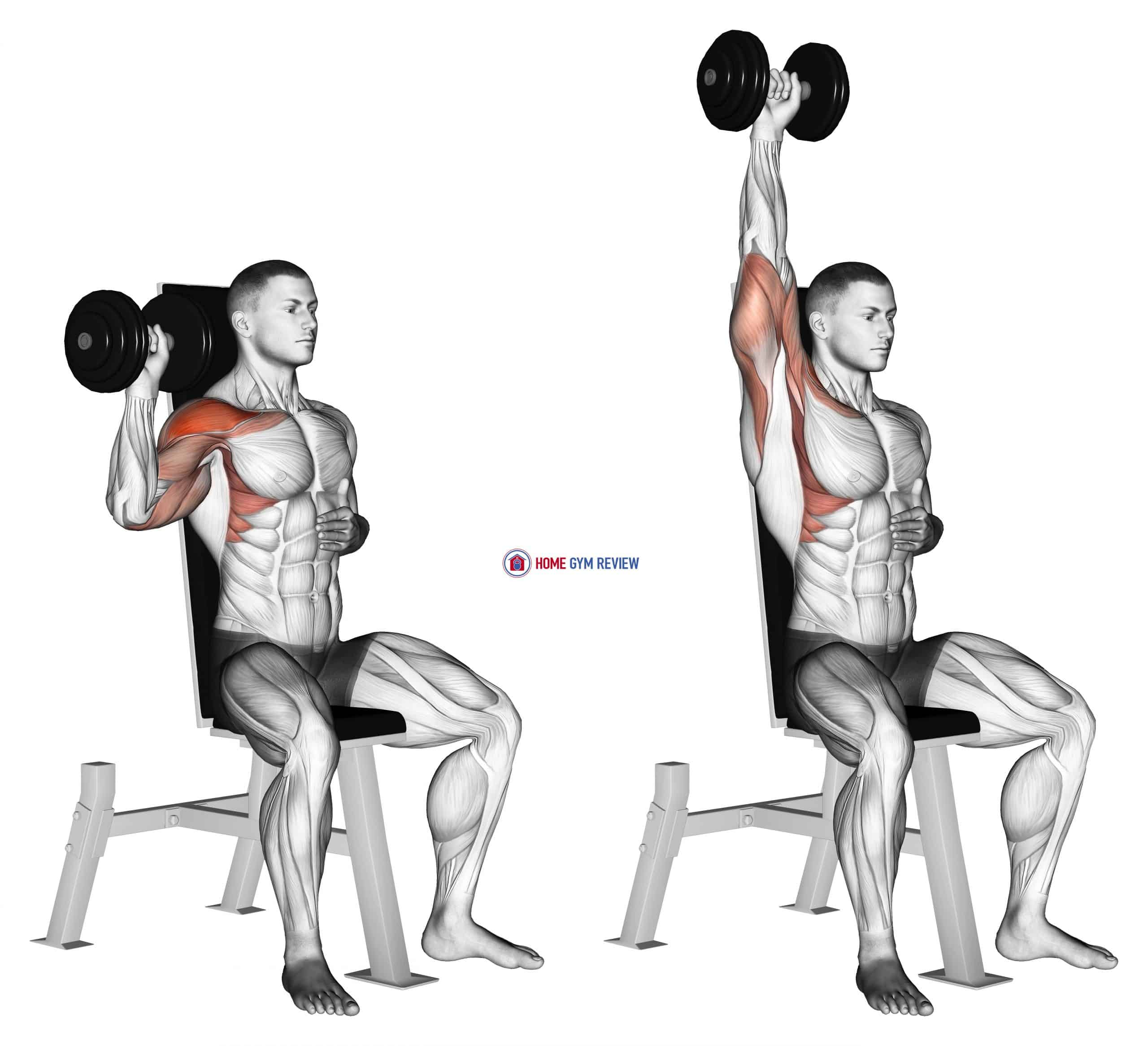 Dumbbell Seated One Arm Shoulder Press