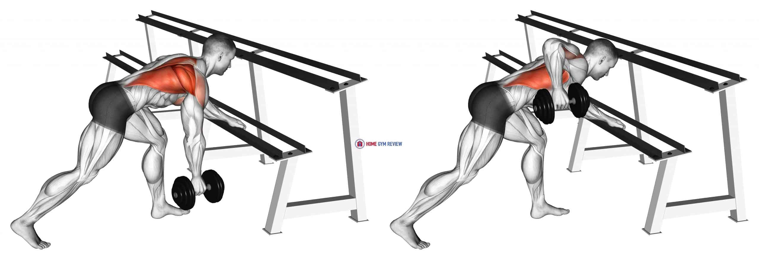 Dumbbell One Arm Row (rack support)