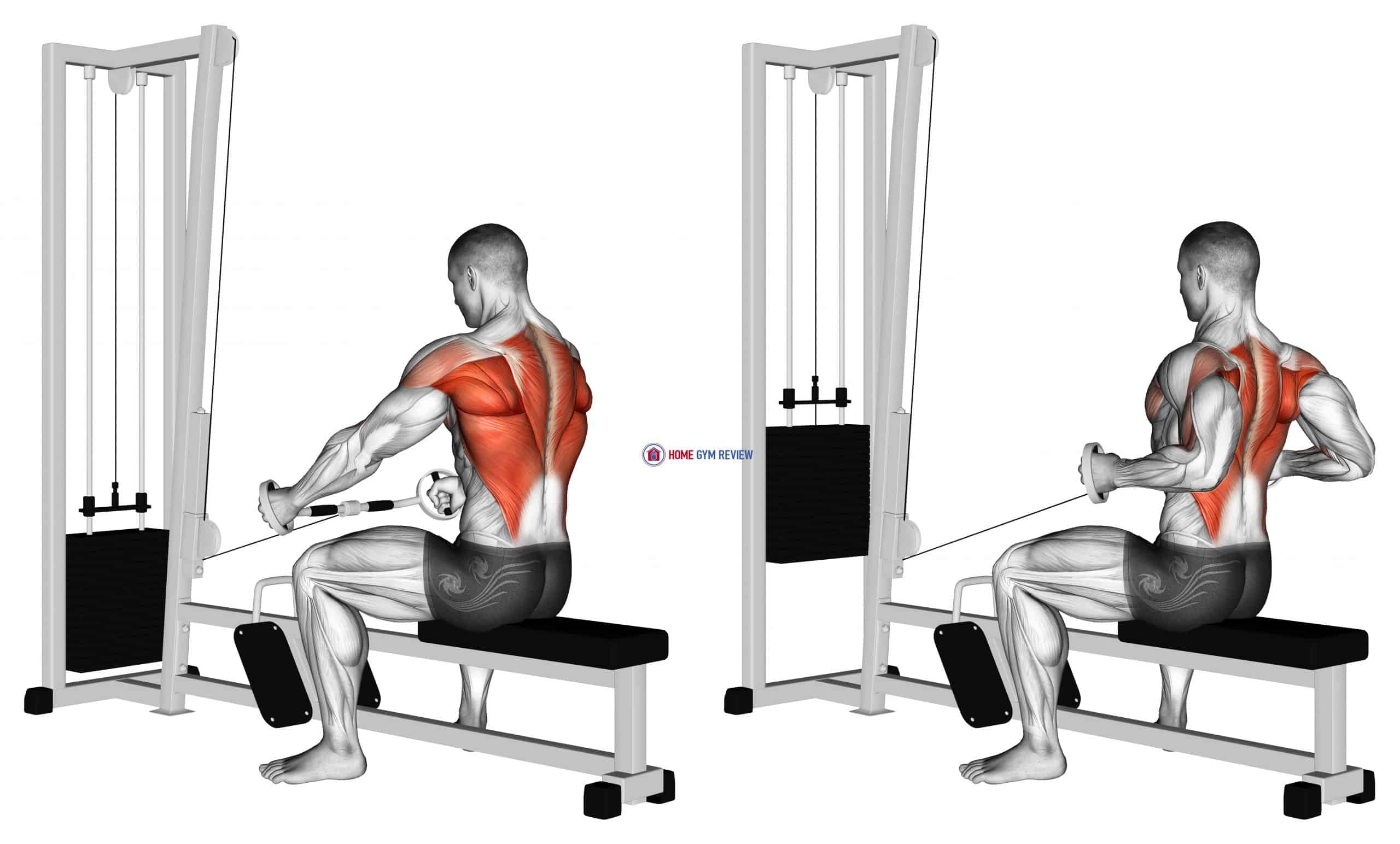 Cable Seated Row (Bent bar)