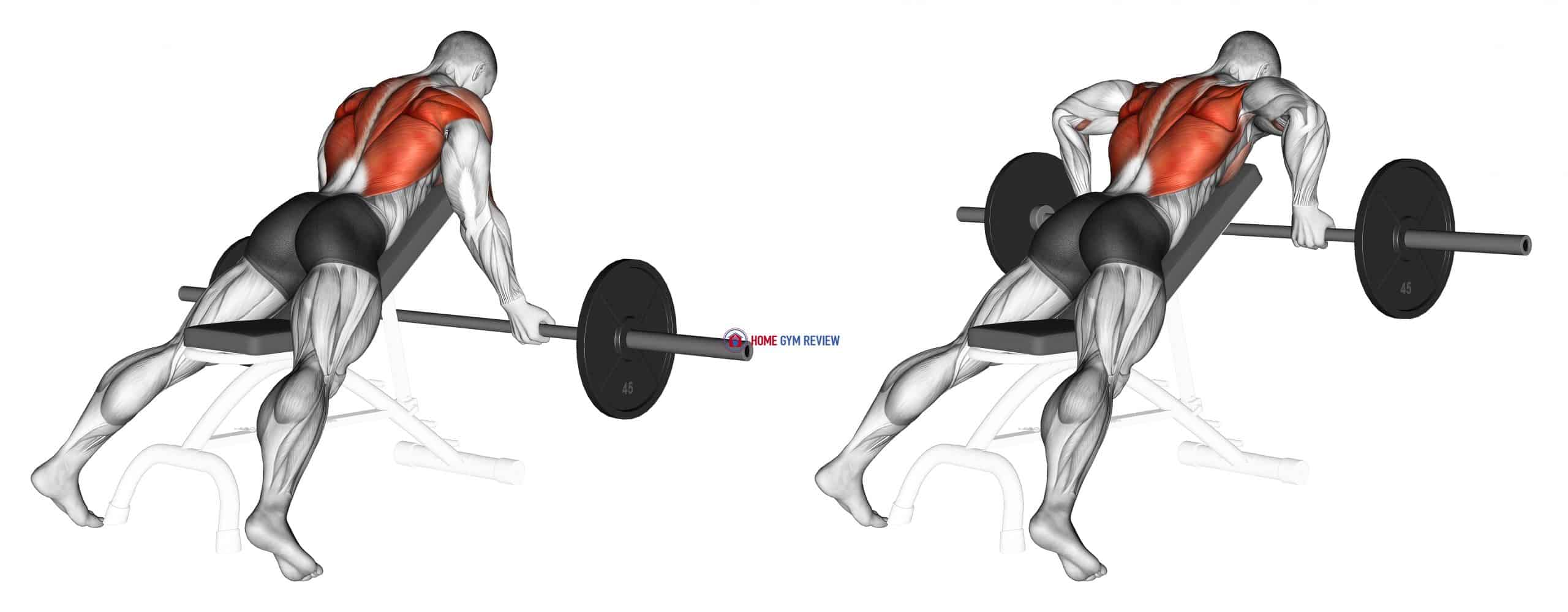Barbell Reverse Grip Incline Bench Row