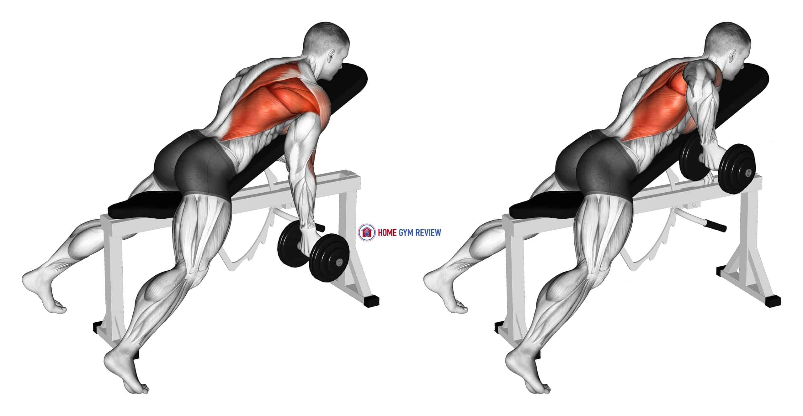 Dumbbell Reverse Grip Incline Bench One Arm Row