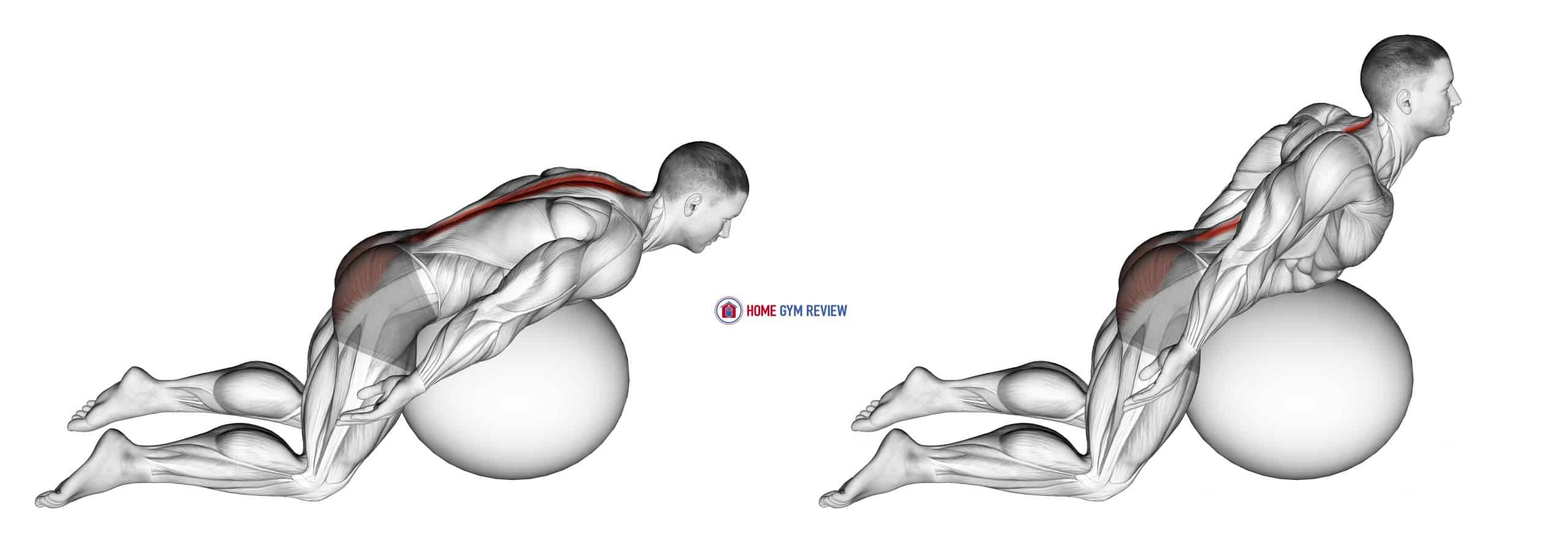 Exercise Ball Back Extension With Arms Extended