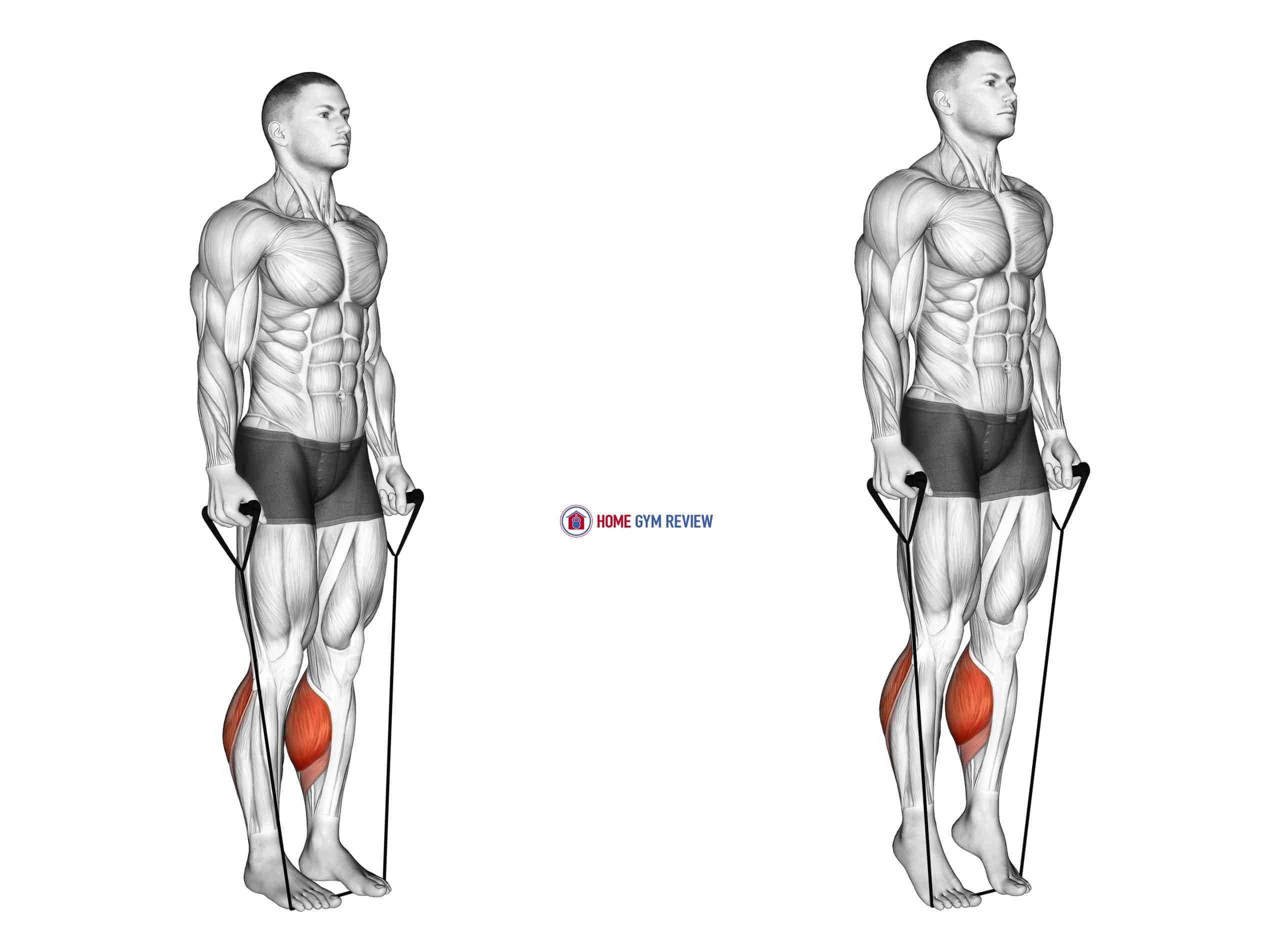 Band Two Legs Calf Raise - (Band under both legs) VERSION 2