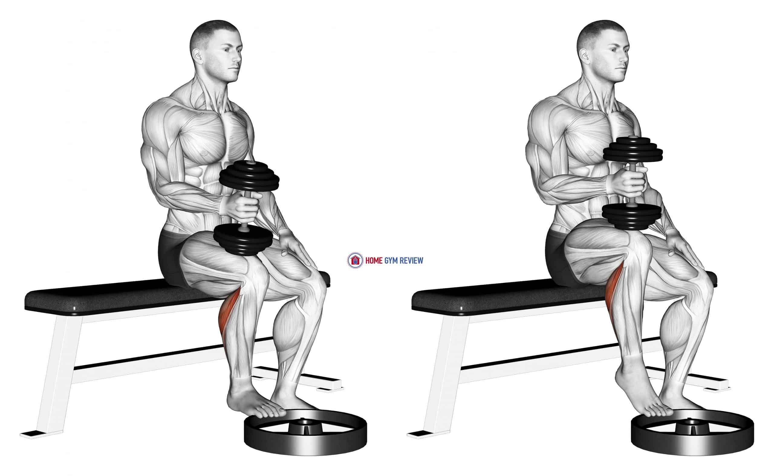 Dumbbell Seated One Leg Calf Raise - Hammer Grip